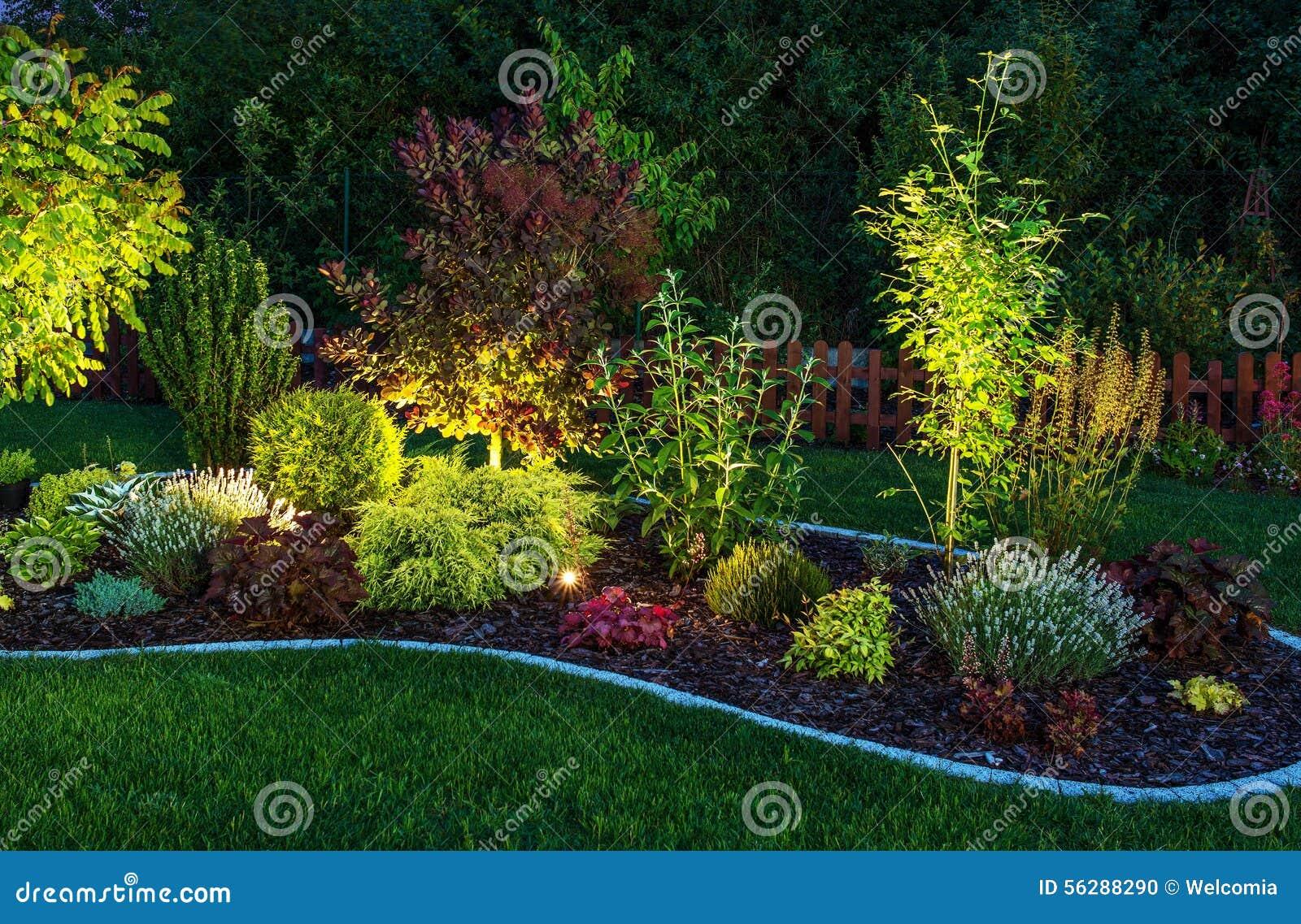 Download Illuminated Garden stock photo. Image of nature, blossom - 56288290