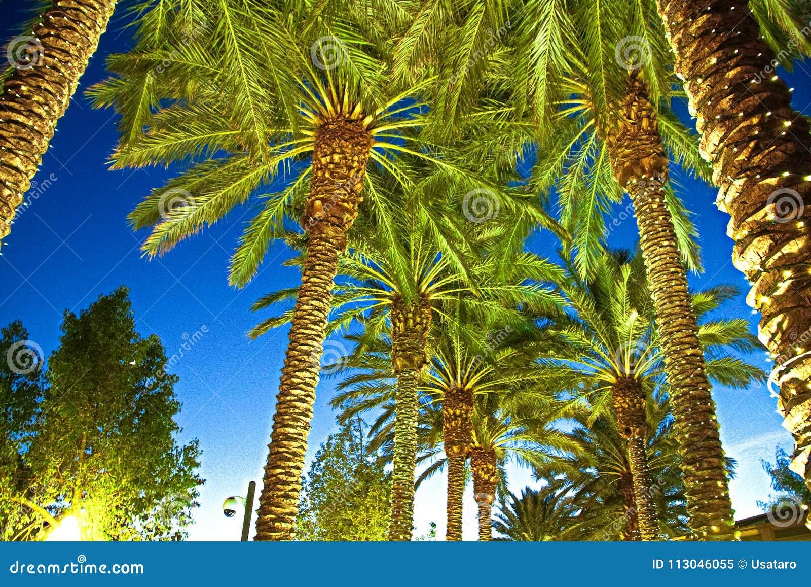 illuminated palm trees at a street stock image image of lighting