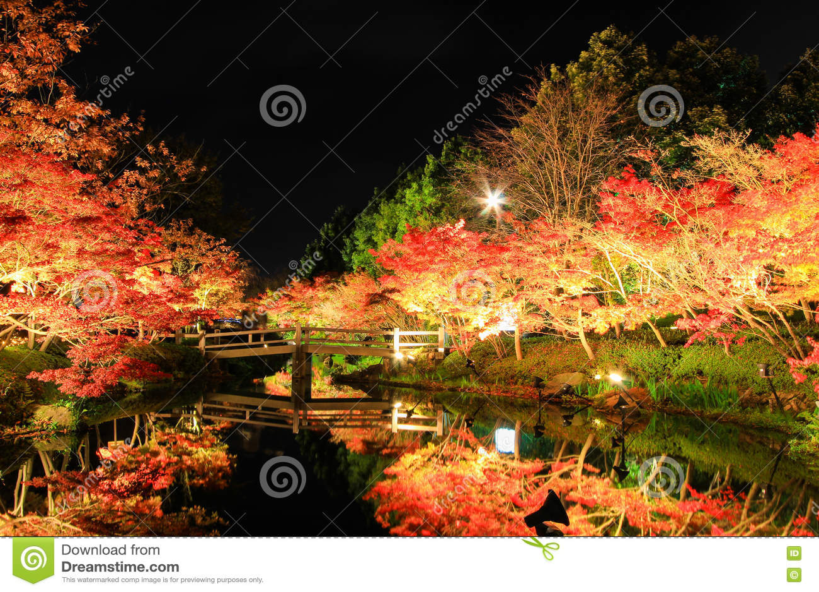 Illumination at Nabana no Sato,Mie,Japan,with attractive autumn leaves