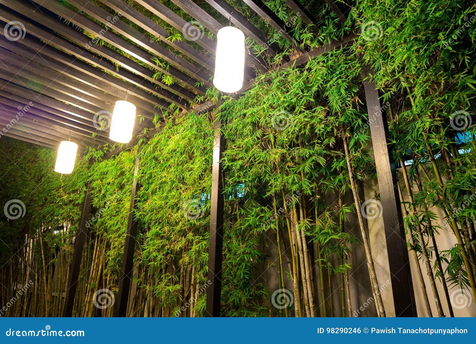 Illuminazione decorativa dentro il giardino di bambù alla notte
