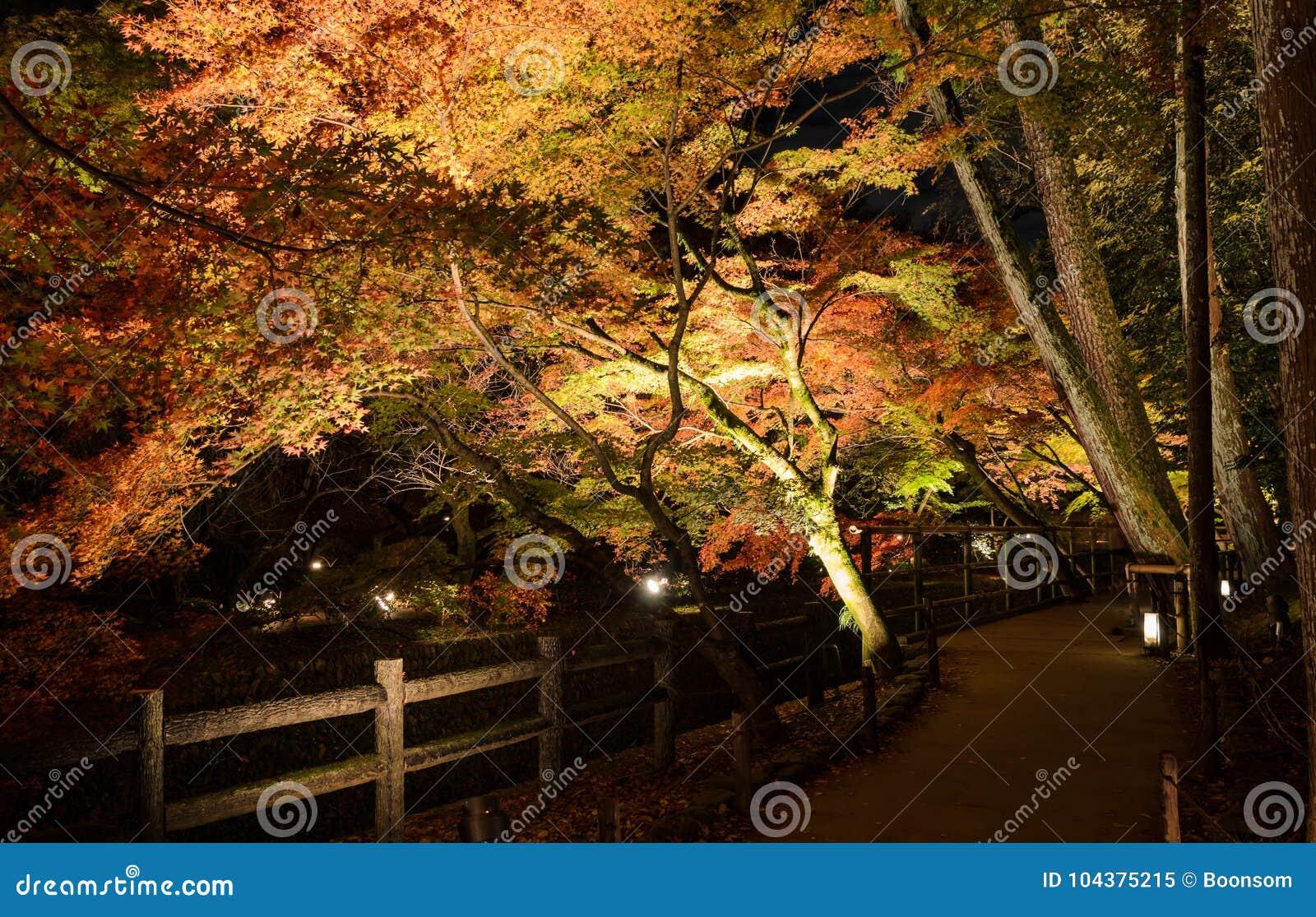 Illuminazione di autunno del giardino giapponese con gli alberi di