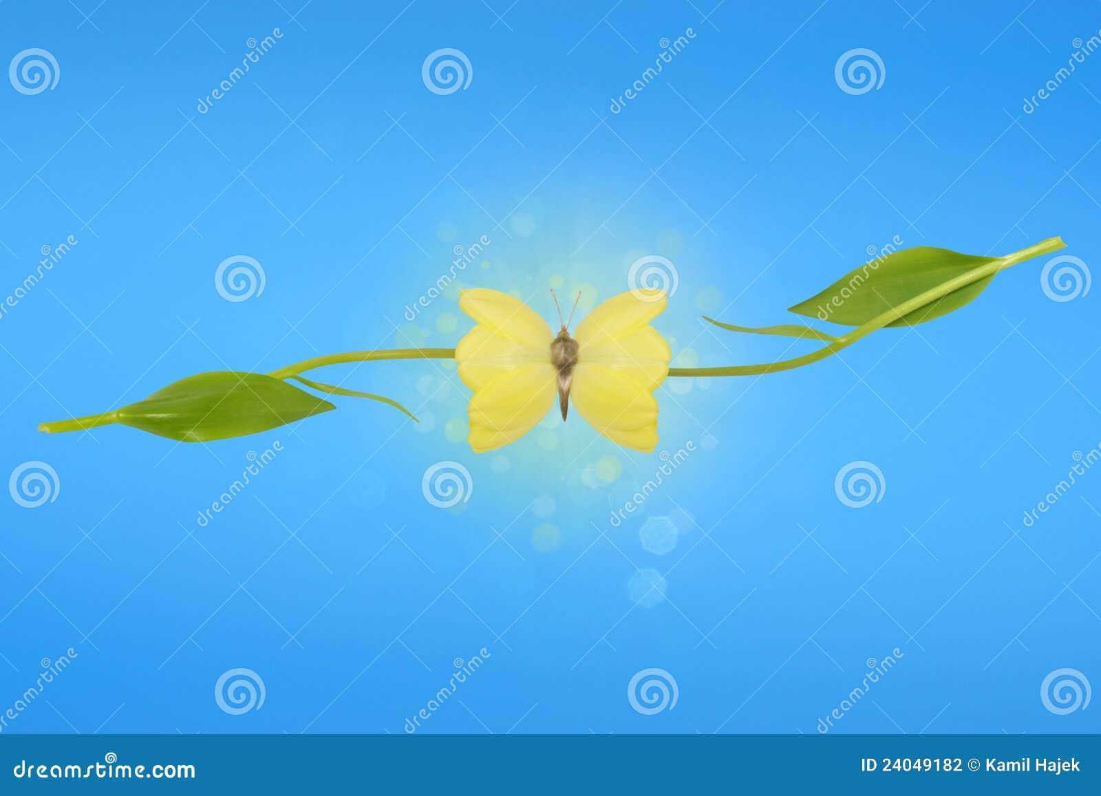 Illusion des ailes de guindineau de tulipe