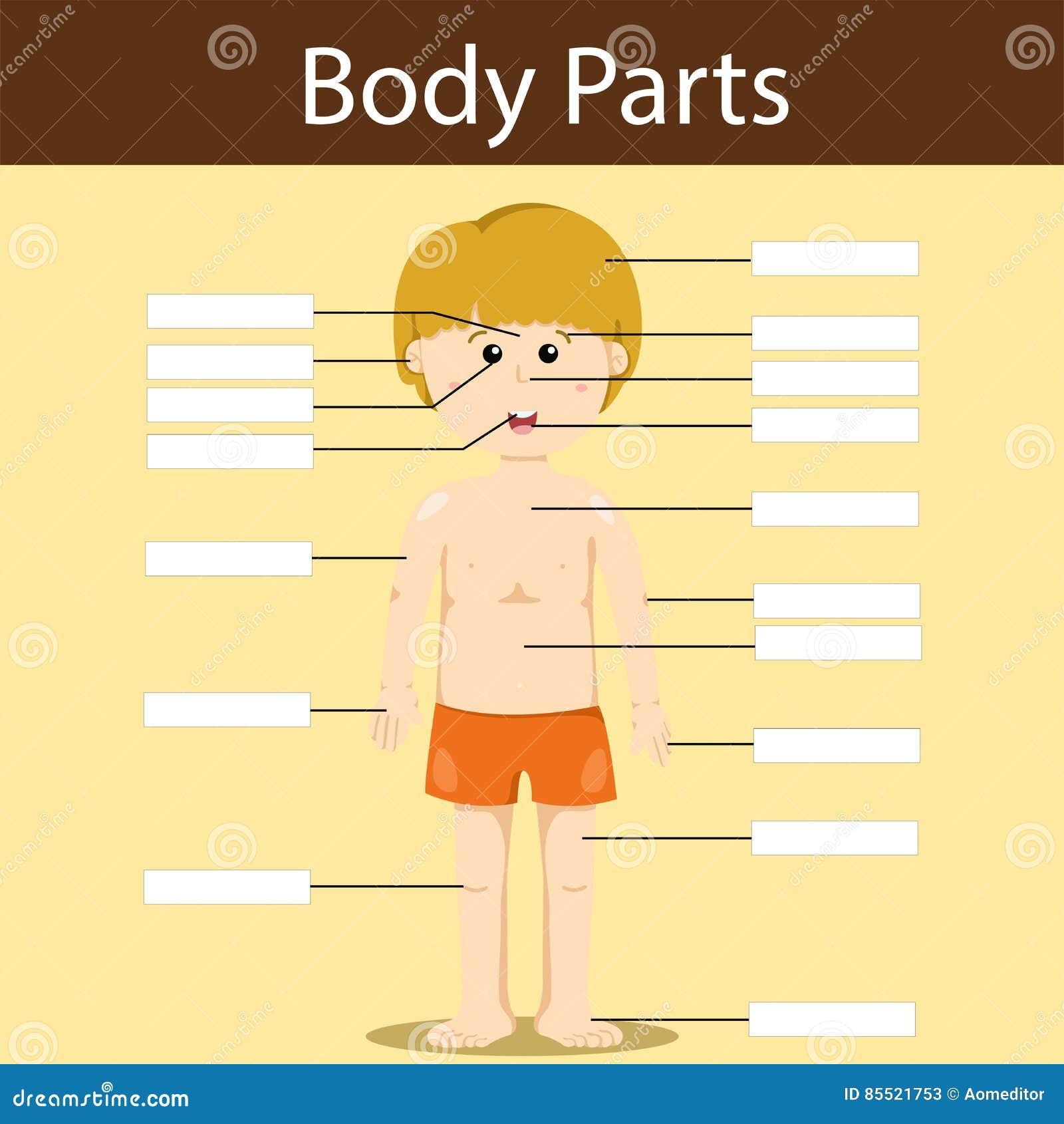 kroppsdelar svenska övning