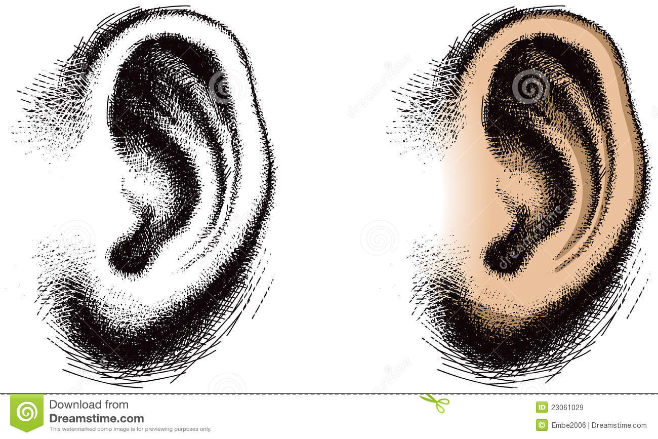 Drawing human ear royalty free stock photography image 25570937 - Illustrated Human Ear Royalty Free Stock Images