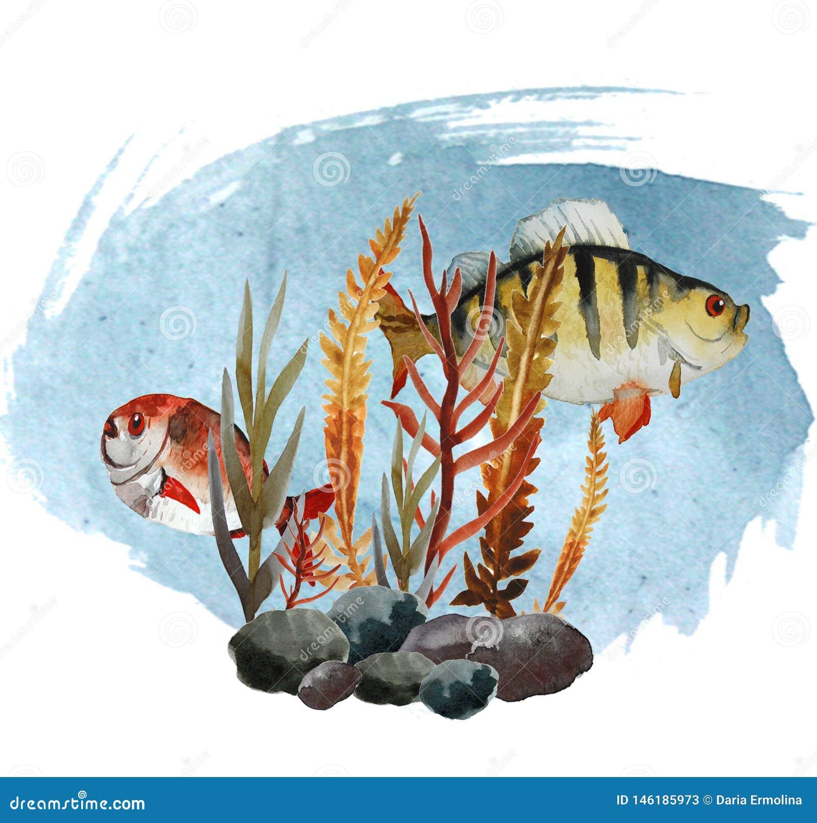 Illustratie met riviervissen