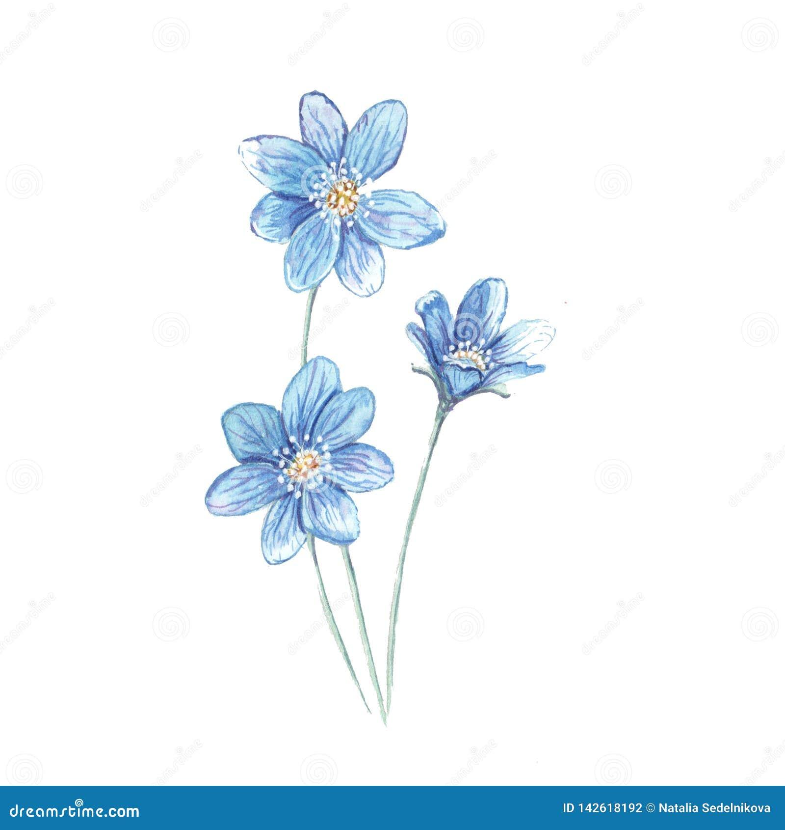 Illustratie van bloemblauw