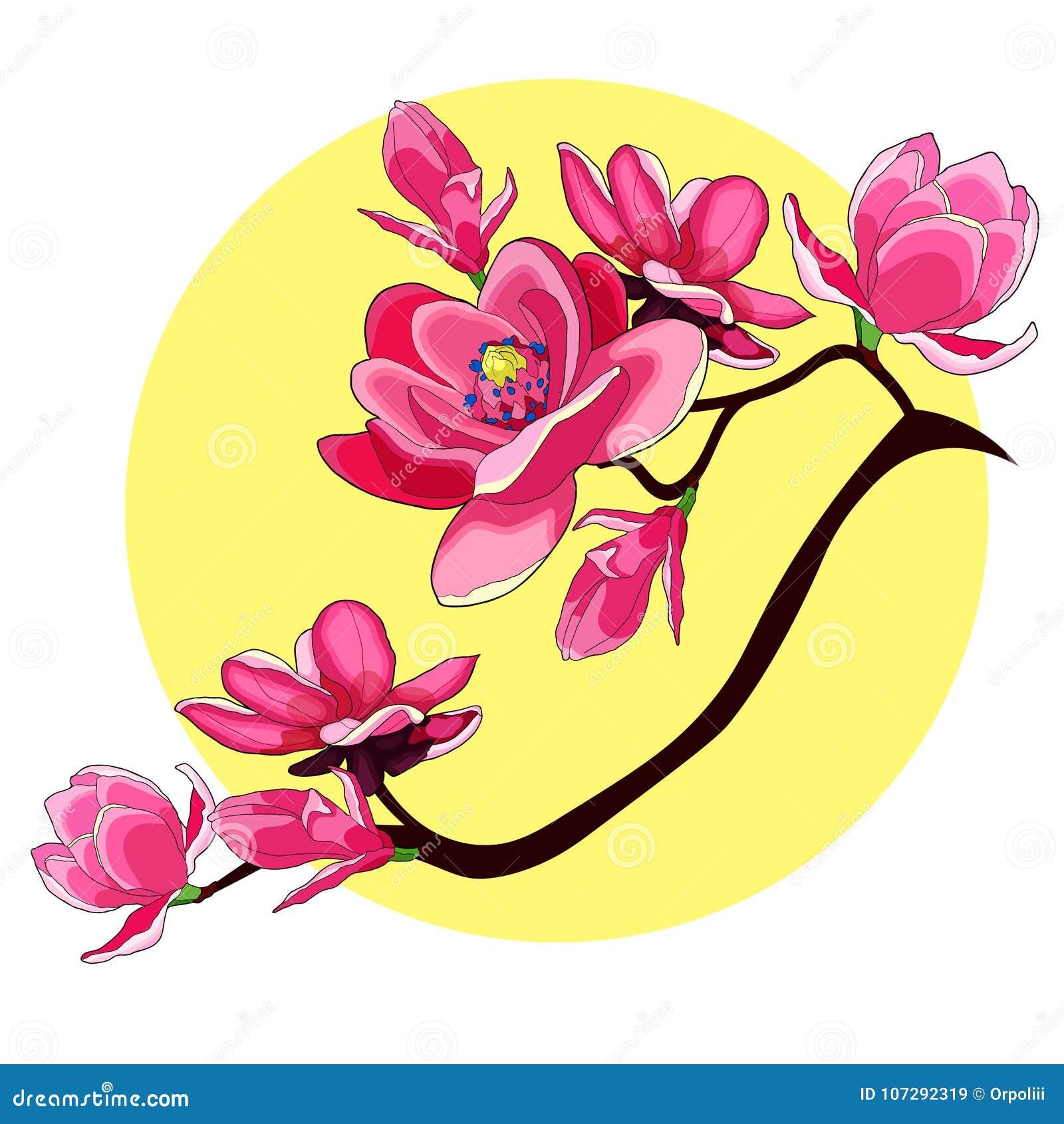Illustratio för vektor för filialmagnoliablomma röd trädgårds- dekorativ