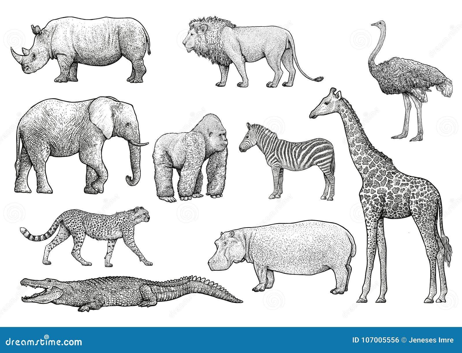 Illustration Africaine D'animaux, Dessin, Gravure, Encre, Schéma, Vecteur Illustration De