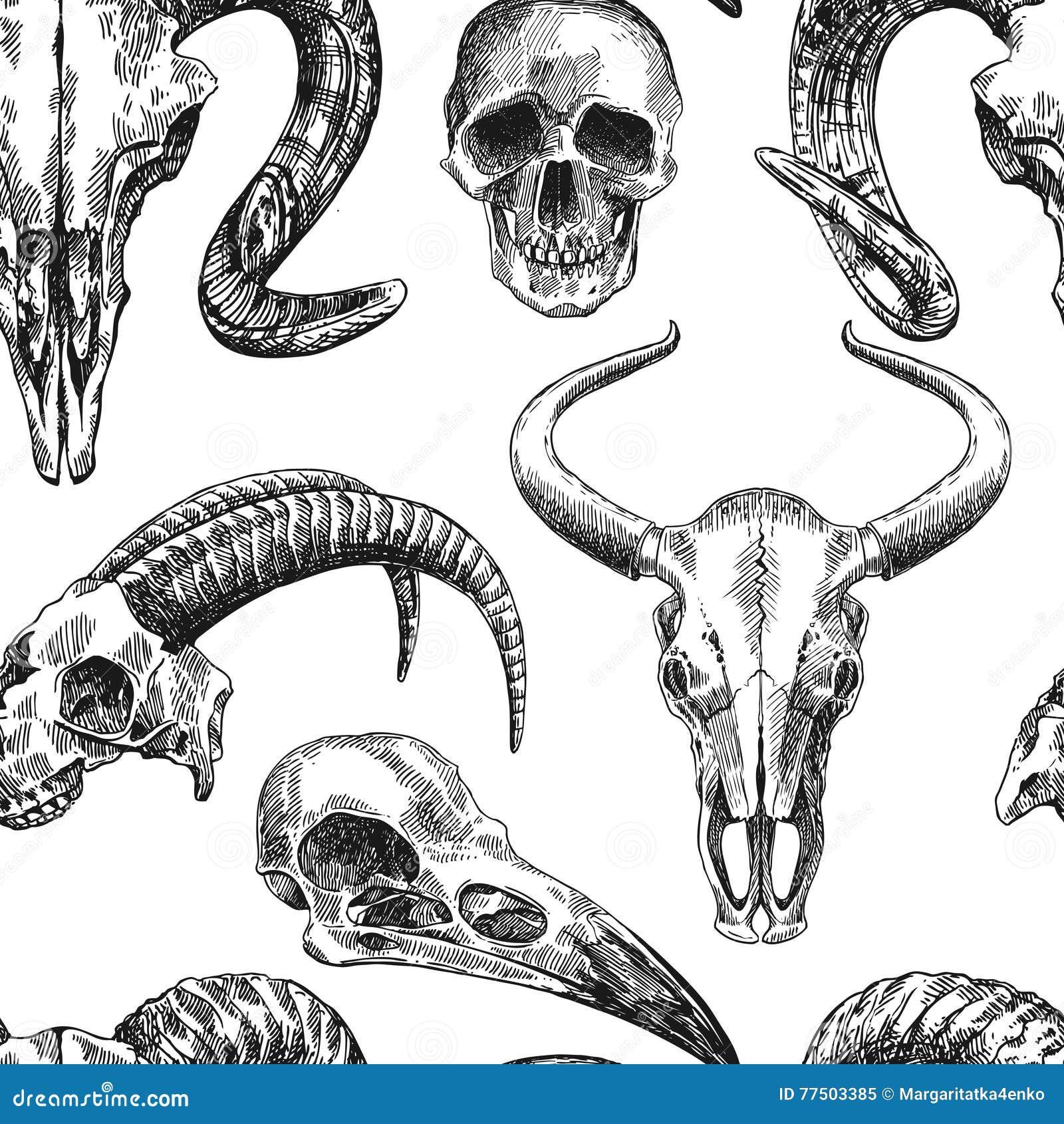 Illustration Animal Skull Stock Vector Illustration Of Boho 77503385