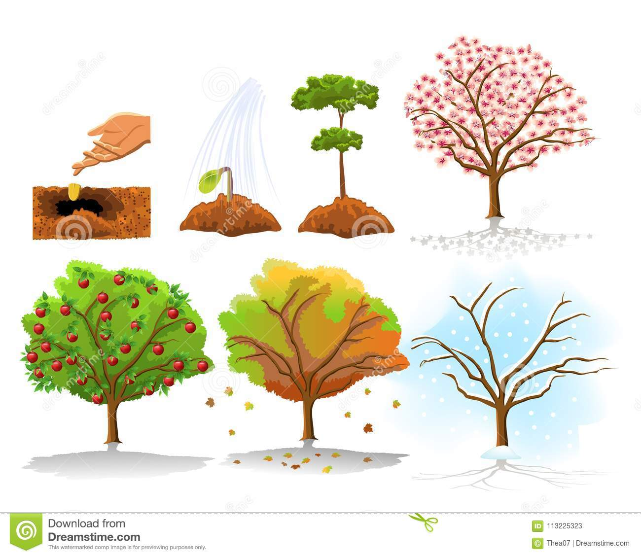 illustration of apple tree planting and growing stages in