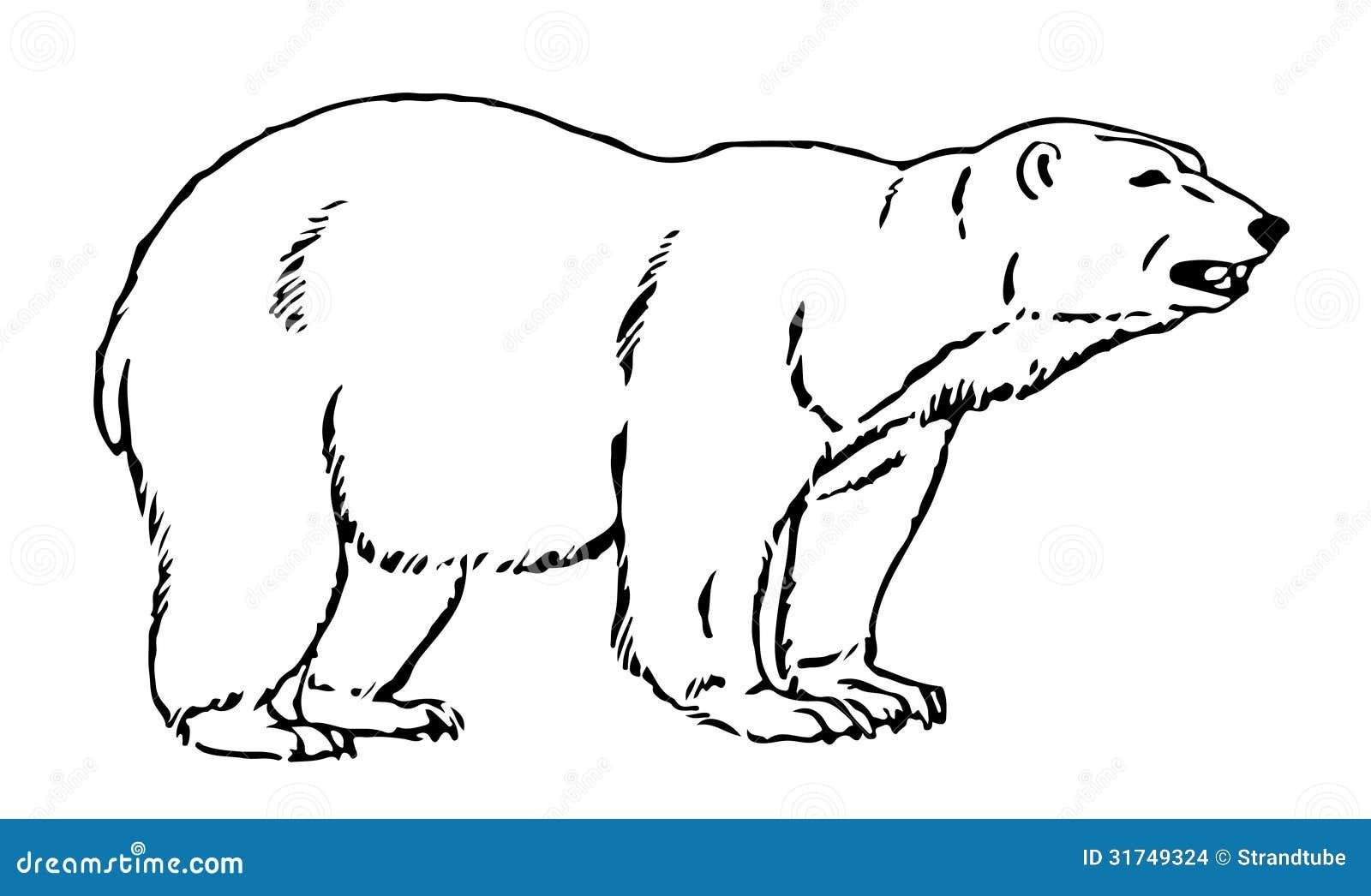Illustration au trait d 39 un ours artic illustration stock - Dessin d un ours ...