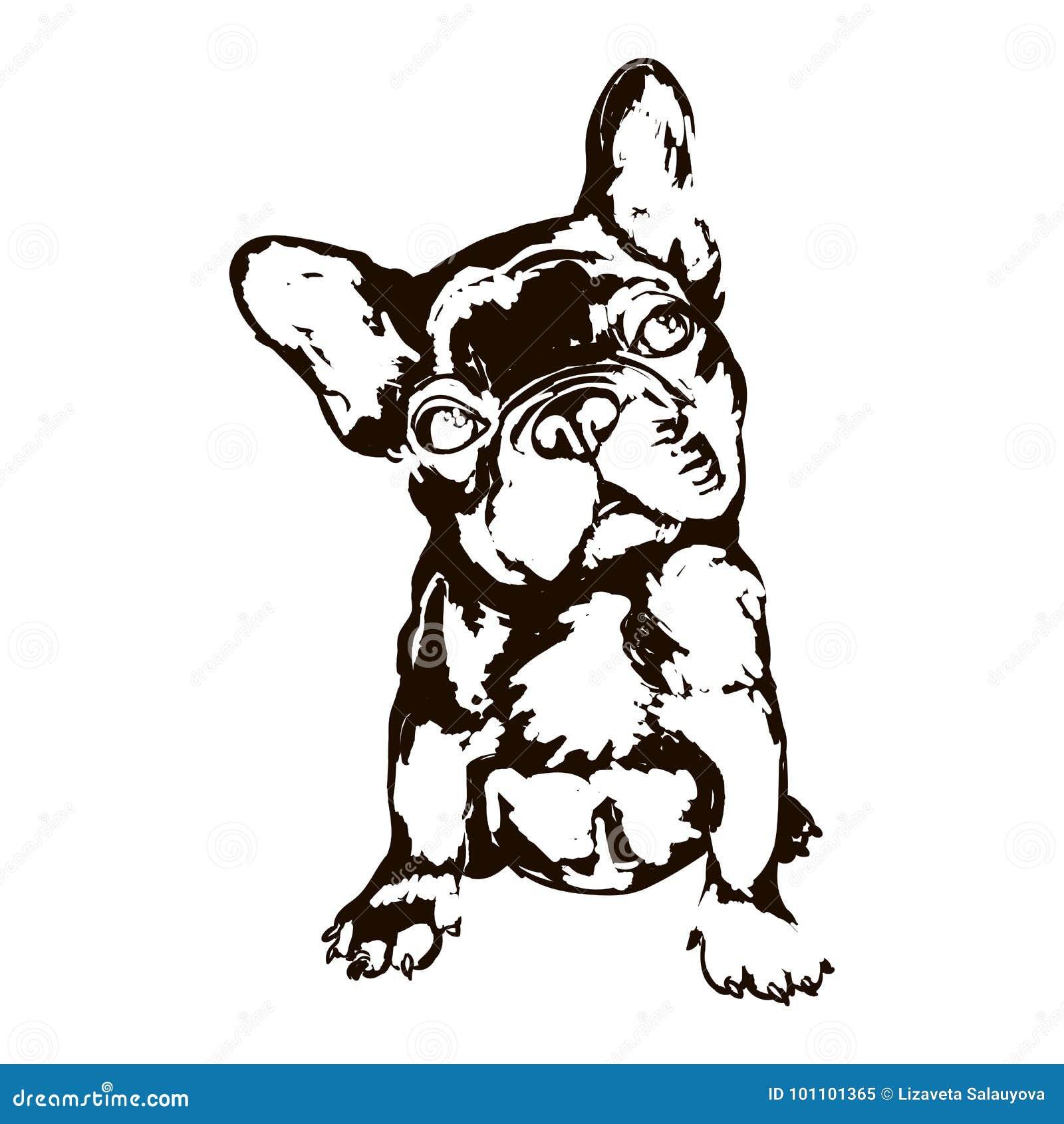 Illustration av den franska bulldoggen för hundavel