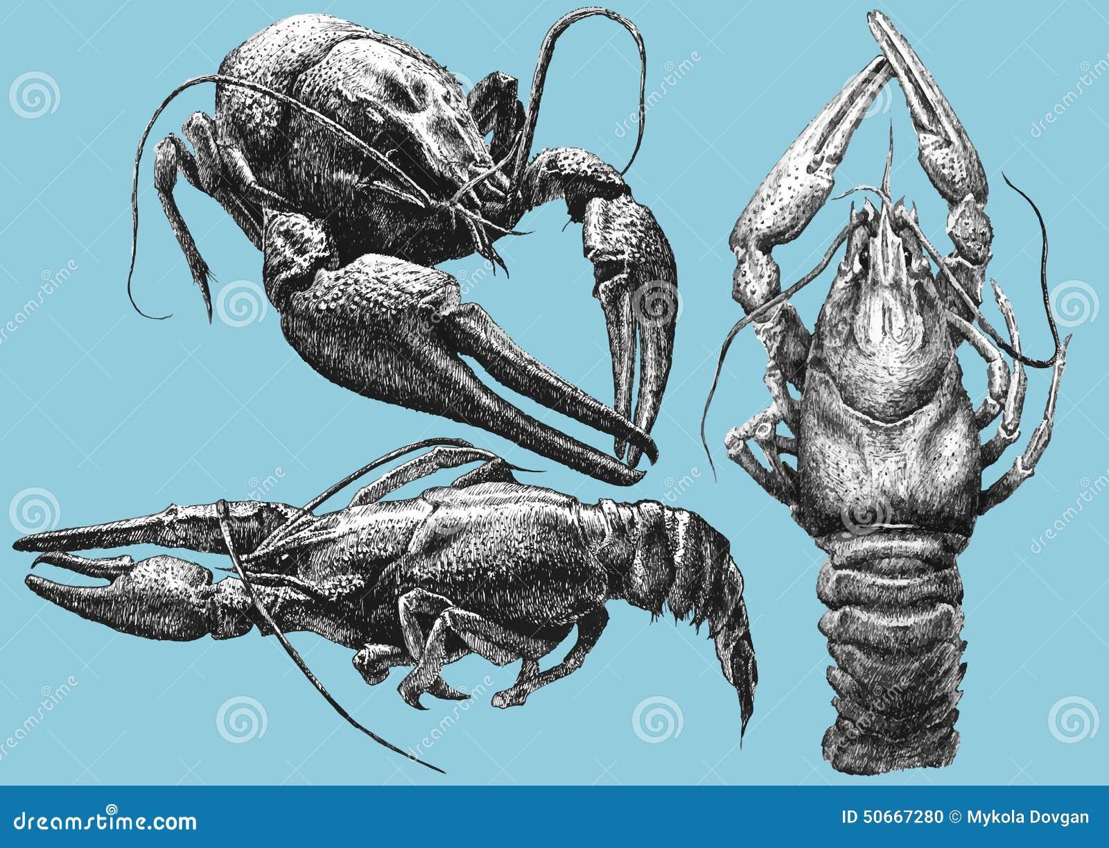 Illustration avec des cancers de diverses formes
