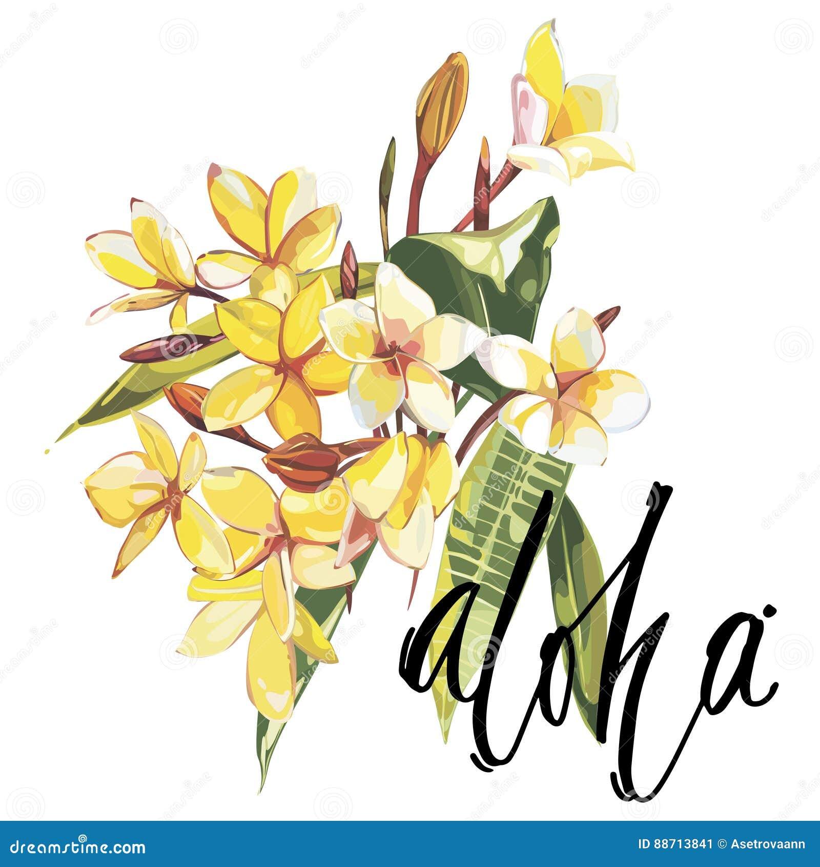 Illustration Avec Les Fleurs Réalistes De Plumeria D