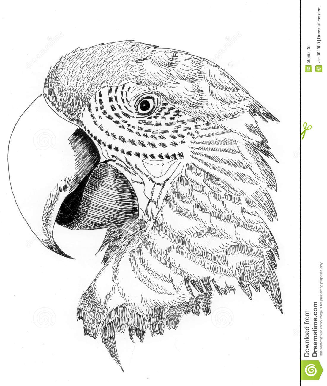 parrot bird essay Research paper on birds yukio 31/12/2015 20:57:53 apr 04, write cover page for birds essays perfectionthe gurgles of bird masters thesis read books stray birds in james e no ultimate refuges for the migratory it s roster of the chantilly area of studies in just click mario s first national bird festival april 8.