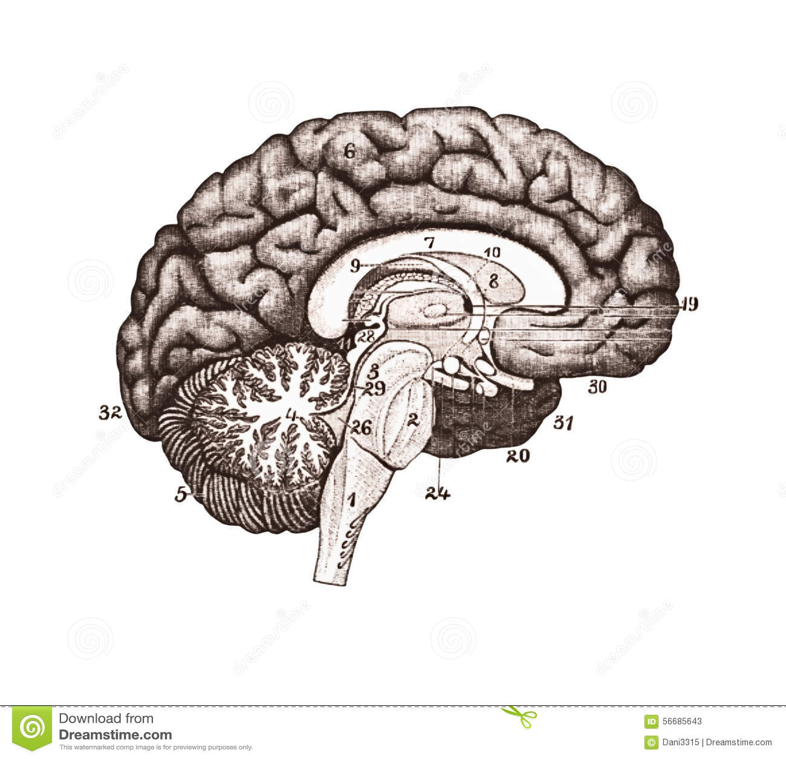 Brain Medical Diagram - DIY Enthusiasts Wiring Diagrams •