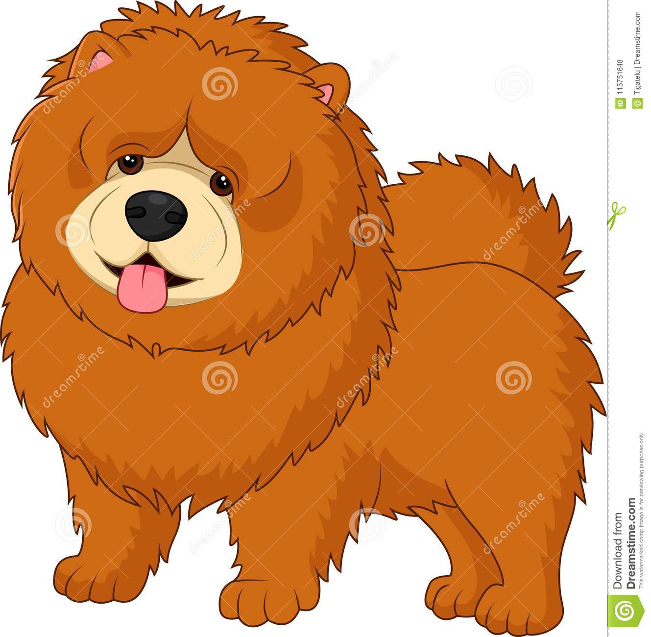 Chow Chow Dog Breed Stock Vector Illustration Of Adorable 115751648