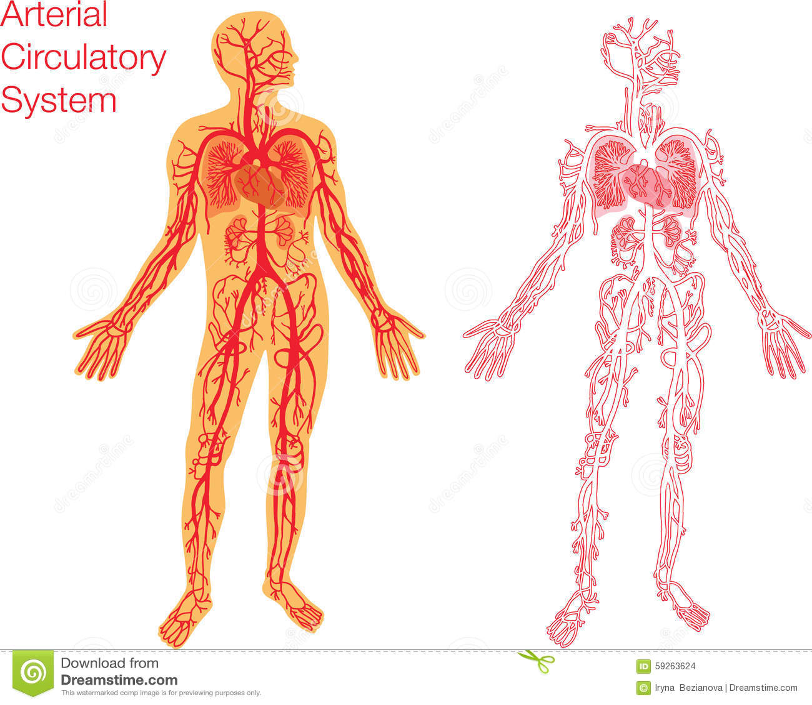Illustration of circulatory system stock vector illustration of illustration of circulatory system stock vector illustration of anatomy blood 59263624 ccuart Gallery