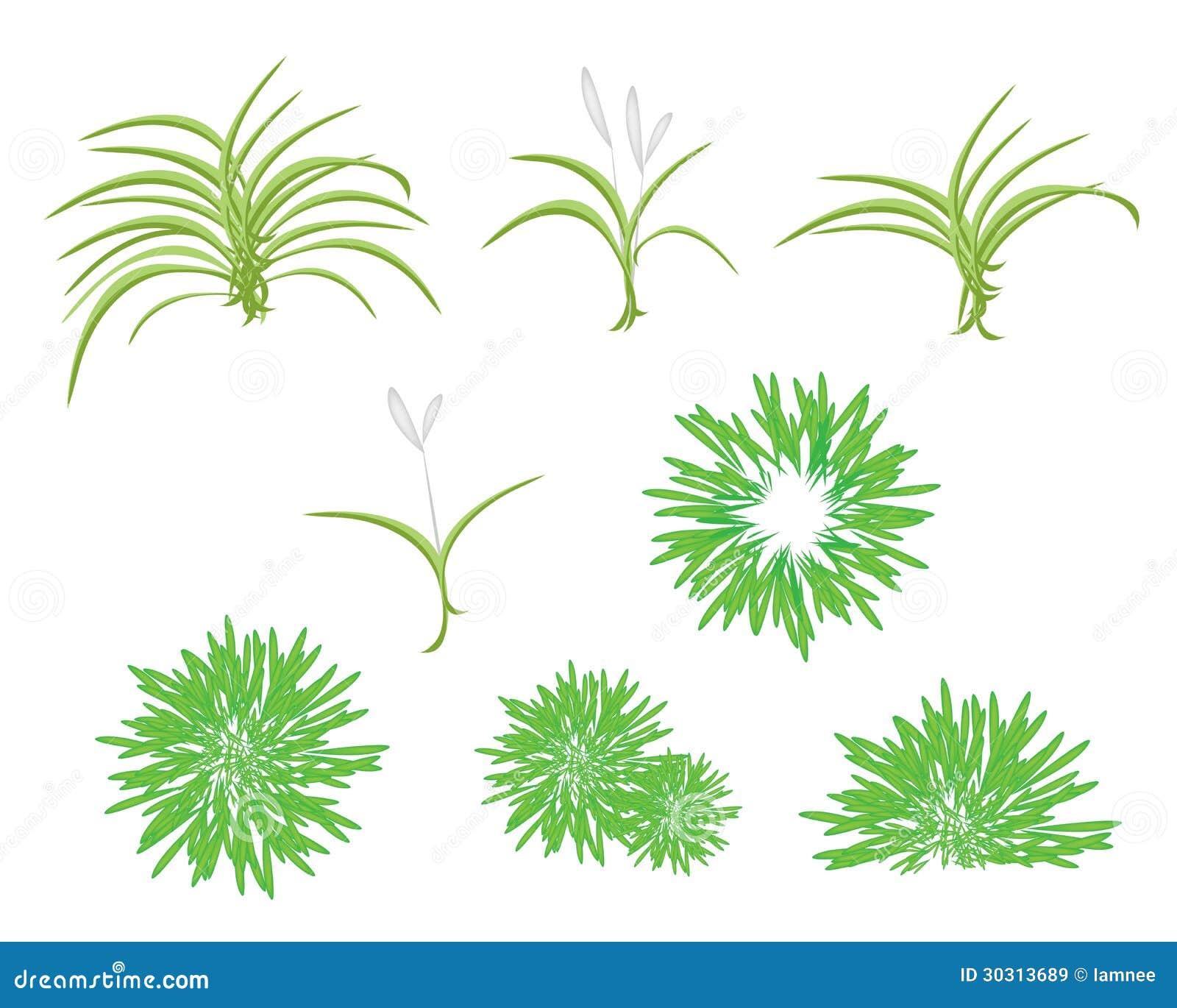 A Isometric Tree Set Of Dracaena Plant Royalty Free Stock