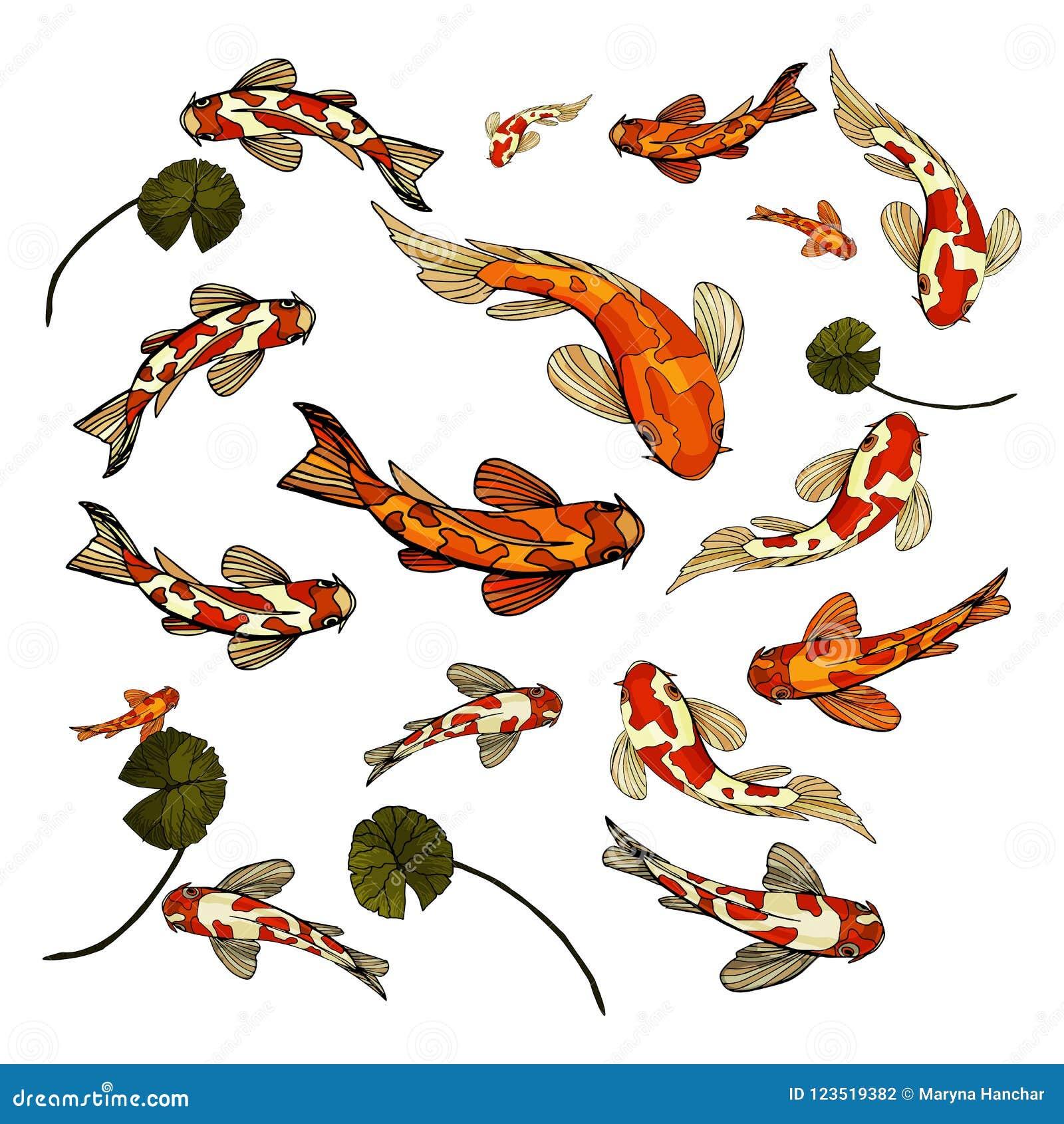 Illustration colorée de vecteur d ensemble de Koi de carpe de poissons