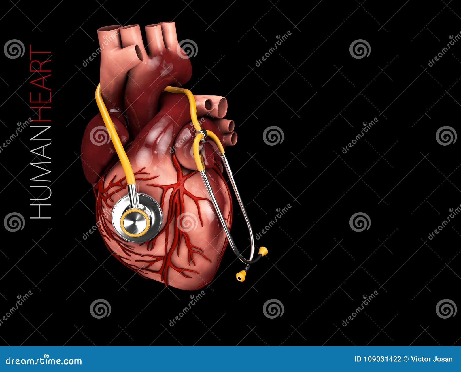 Illustration 3d der menschlichen Herzanatomie mit Stethoskop Organsymbol Getrennt auf schwarzem Hintergrund