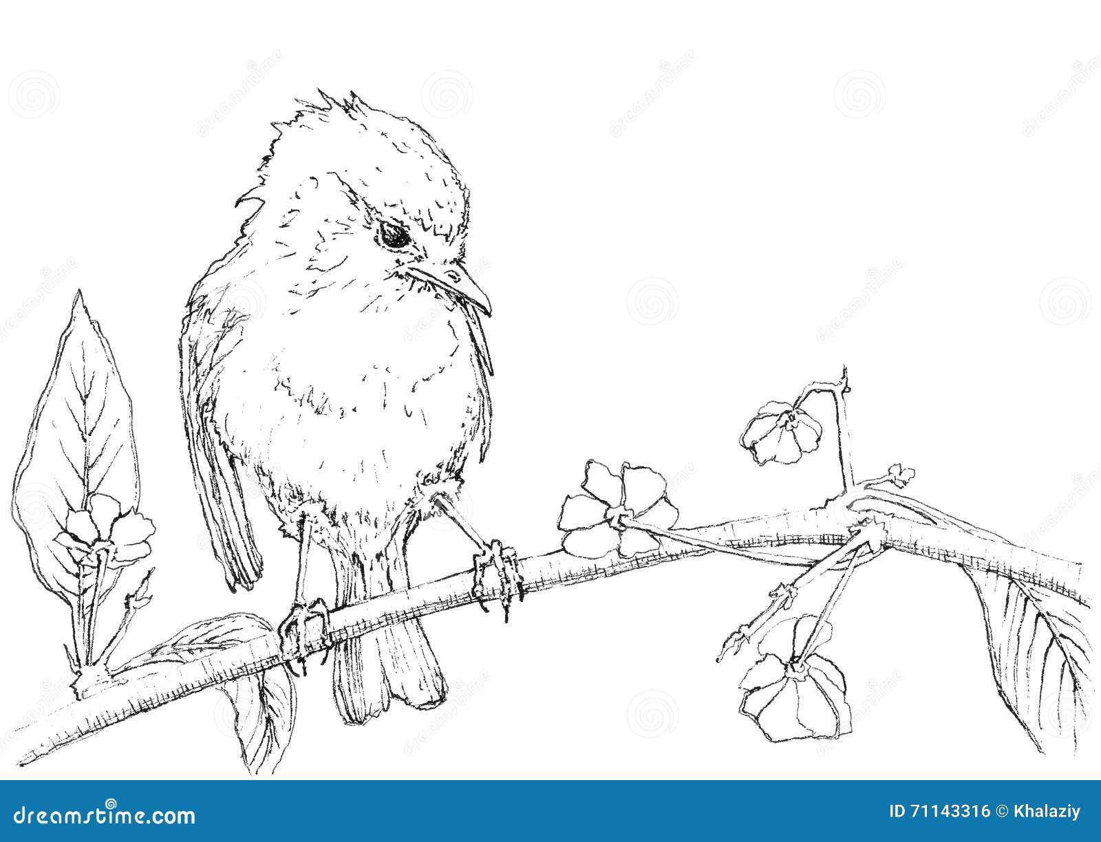 Illustration D'encre D'un Oiseau Illustration Stock