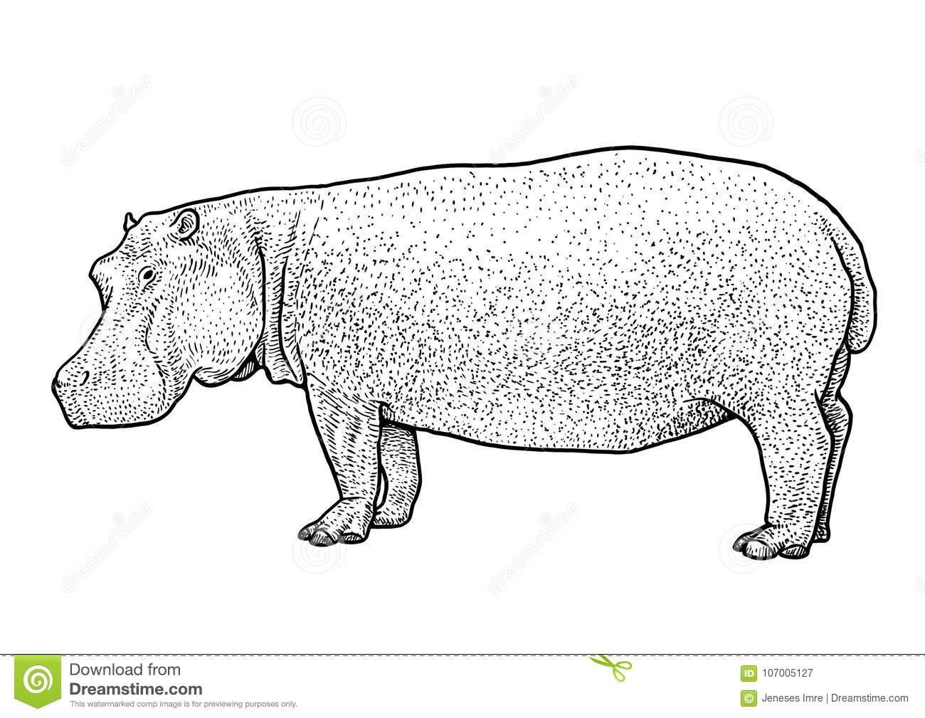 Illustration D Hippopotame Dessin Gravure Encre Schema Vecteur Illustration De Vecteur Illustration Du Dessin Illustration 107005127
