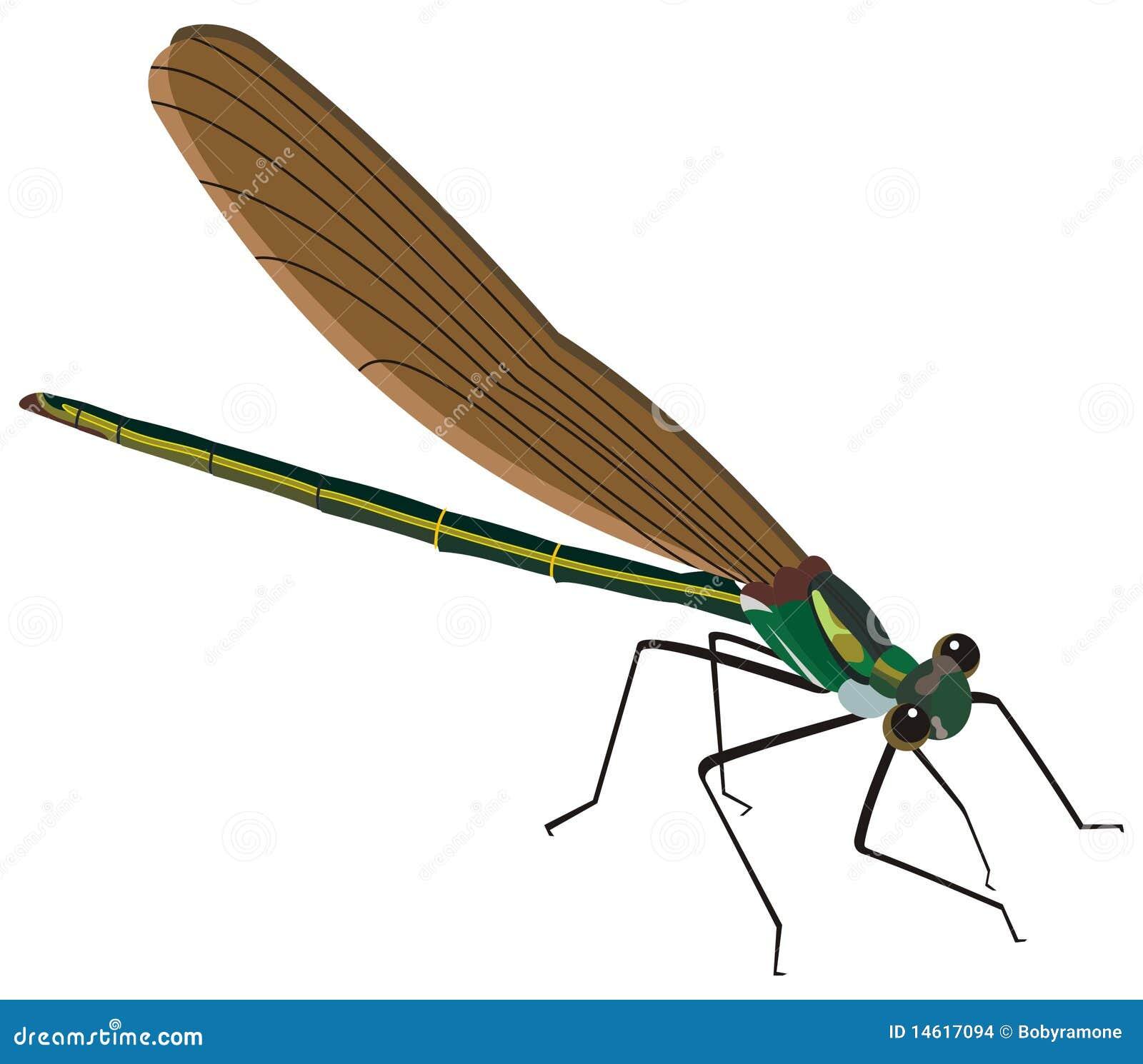 Illustration d insecte de moustique
