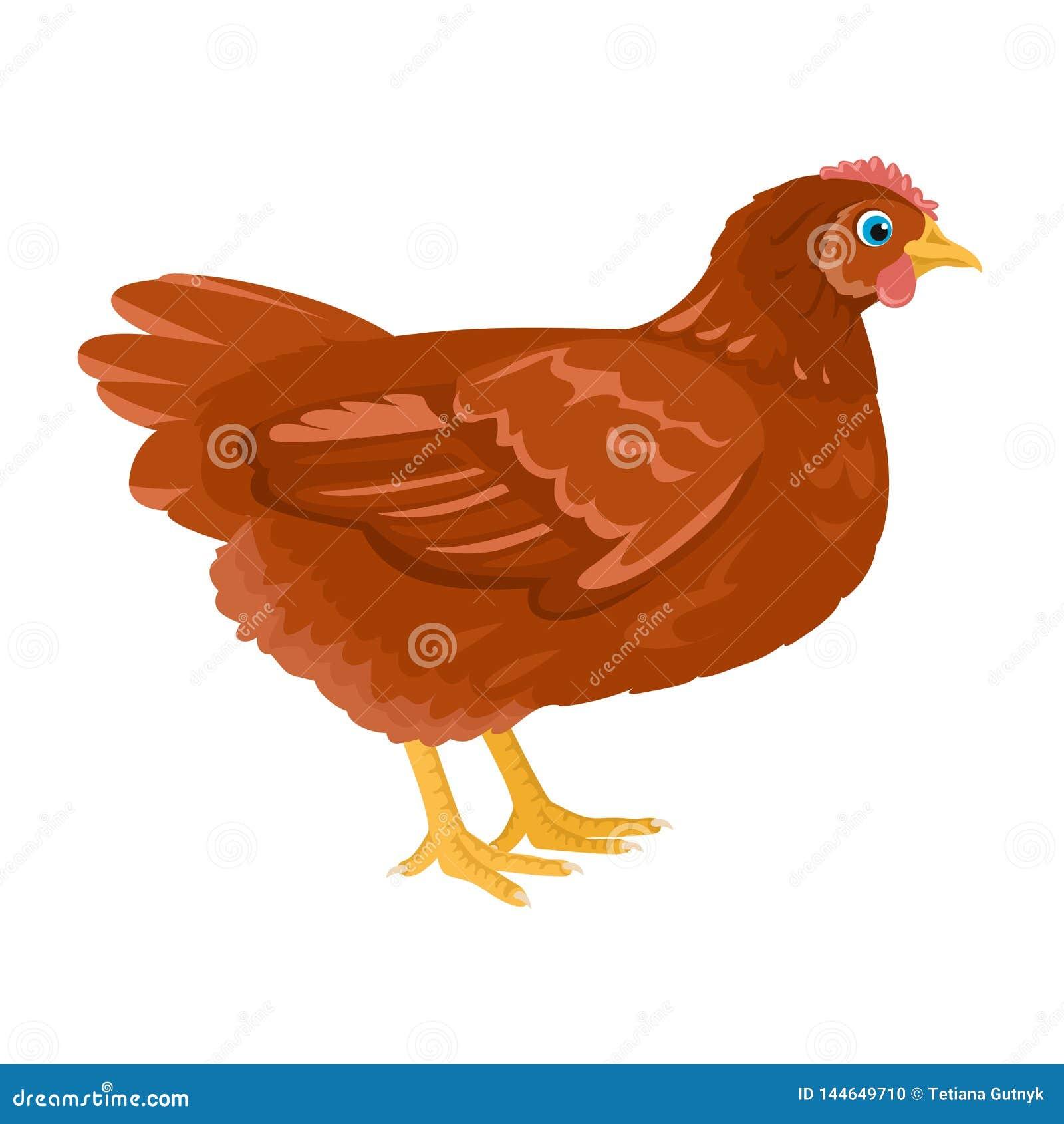 Illustration De Bande Dessin E De Vecteur De Poulet Oiseau De