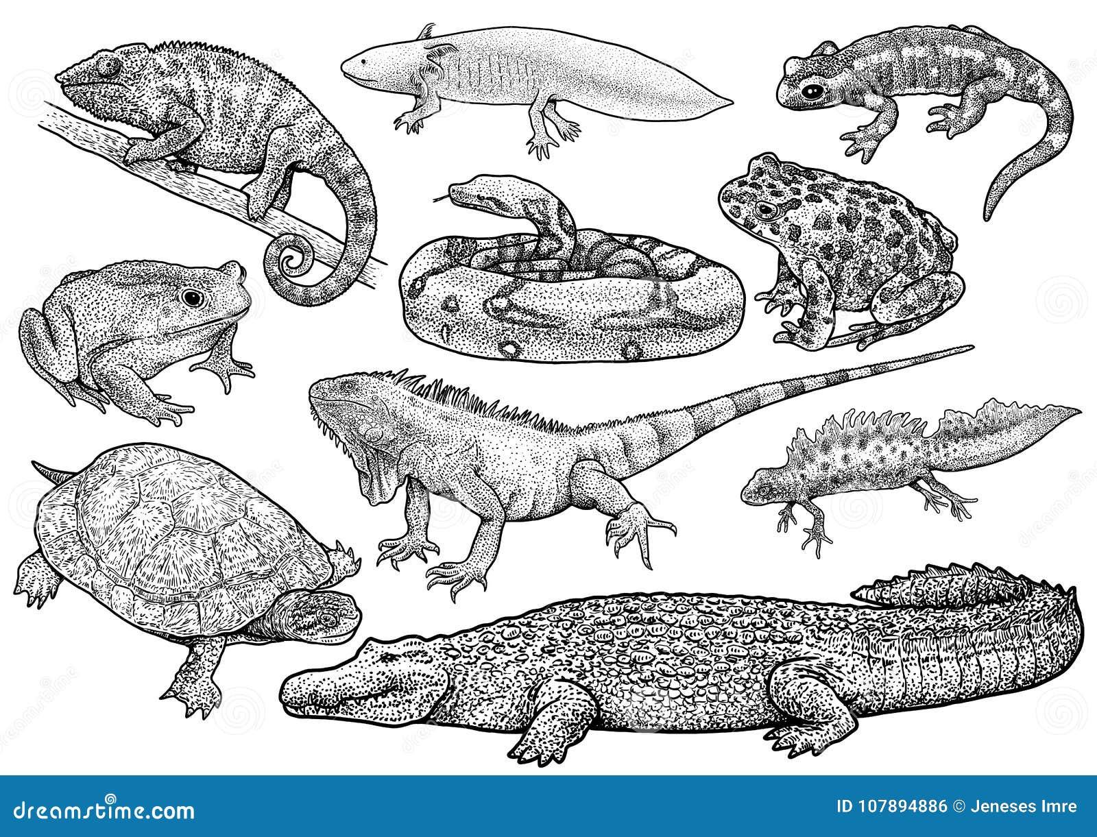 Illustration de collection d animaux marins, dessin, gravure, encre, schéma, illustration de coquille de vectorNautilus, dessin,