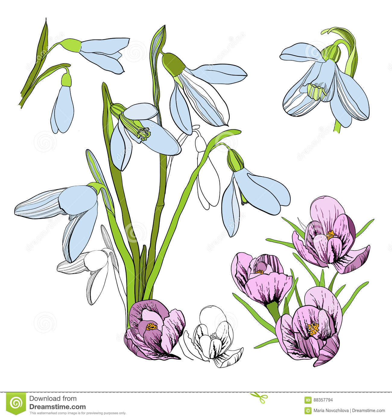Illustration De Croquis De Dessin De Perce Neige Premier Galanthus