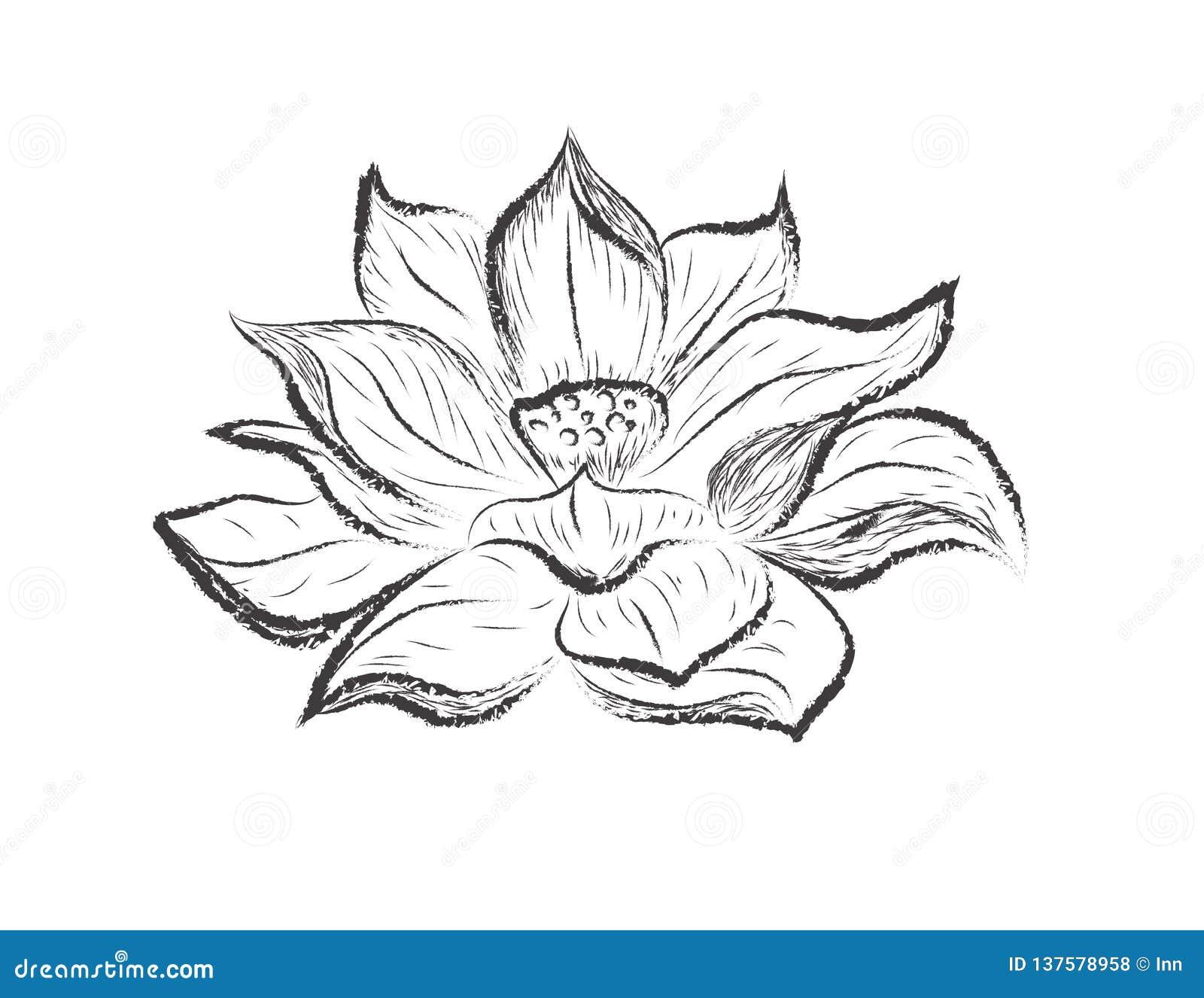 Illustration De Croquis De Fleur De Lotus Illustration De