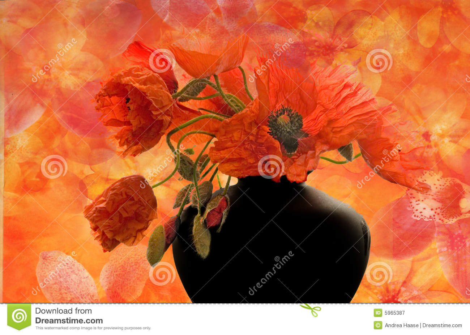 Illustration de fleur de pavot