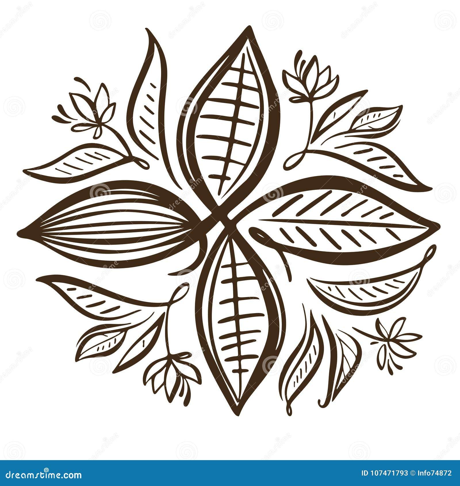 Illustration de graines de cacao Graines de cacao de chocolat