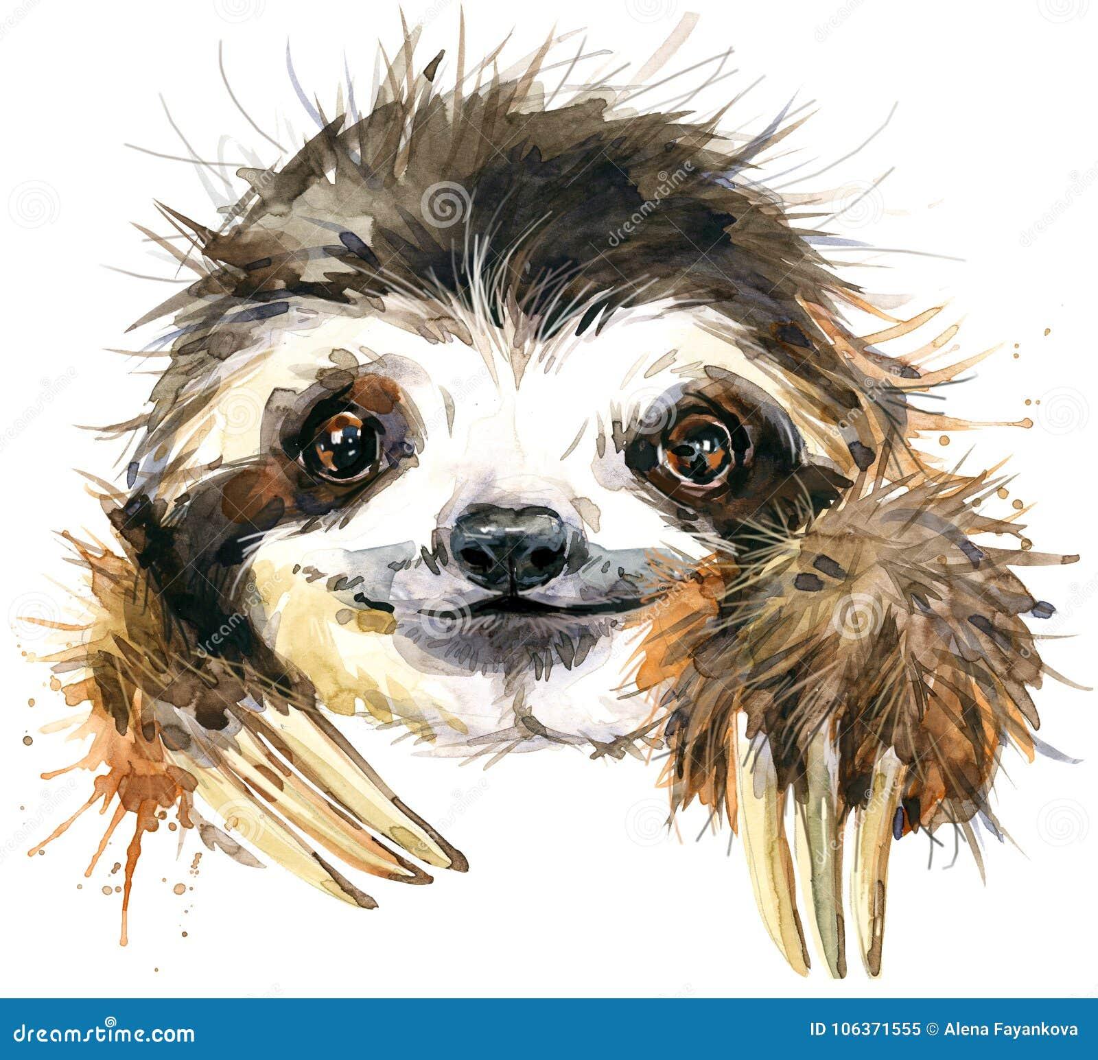 Illustration de paresse d aquarelle animal tropical
