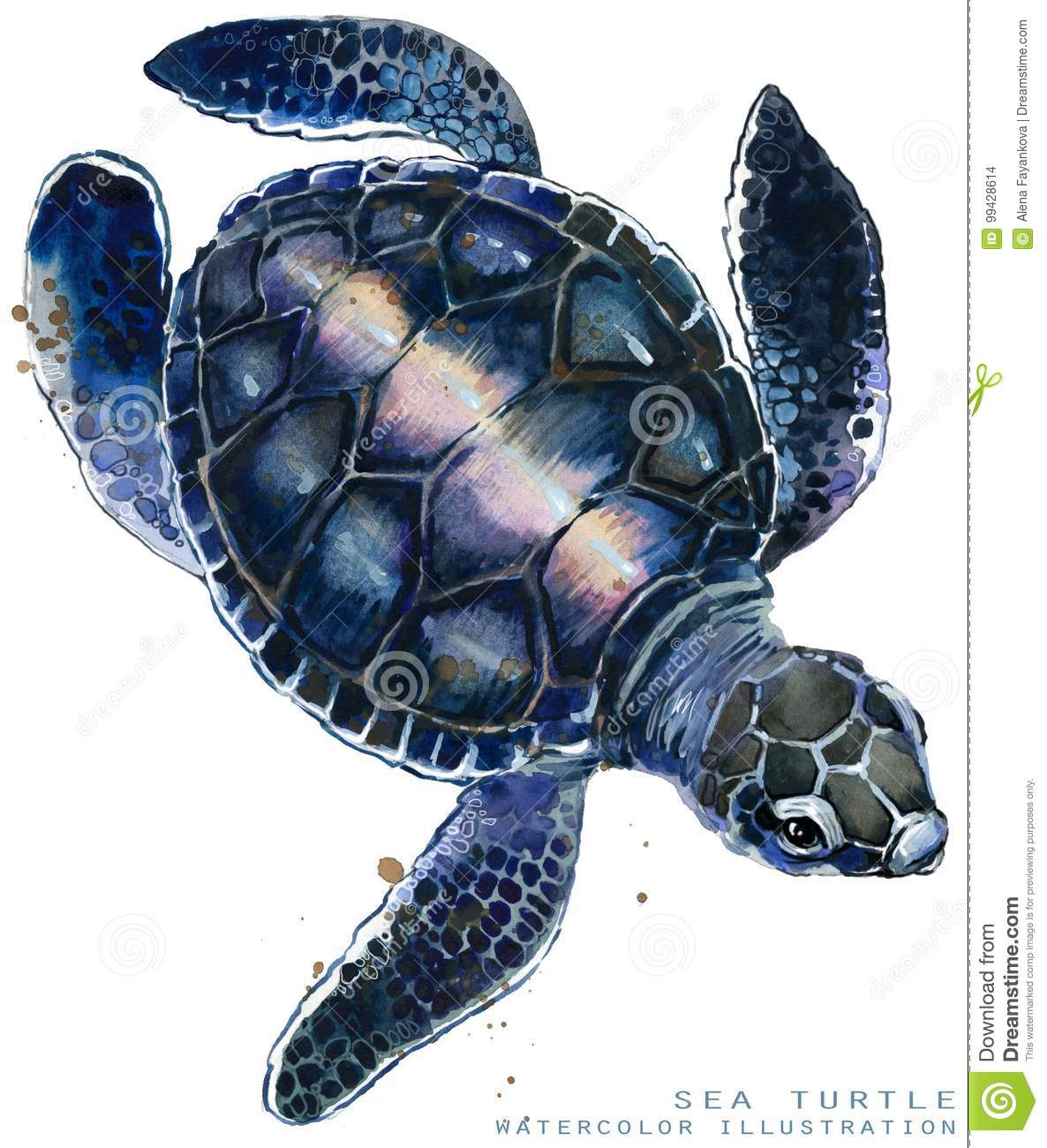 Illustration de tortue de mer d aquarelle