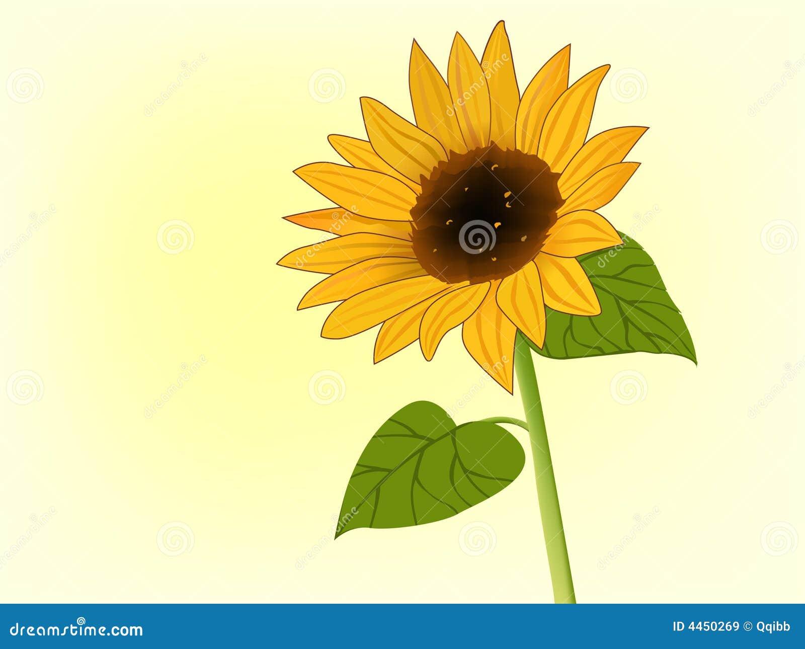 illustration de tournesol en fleur illustration de vecteur image 4450269. Black Bedroom Furniture Sets. Home Design Ideas