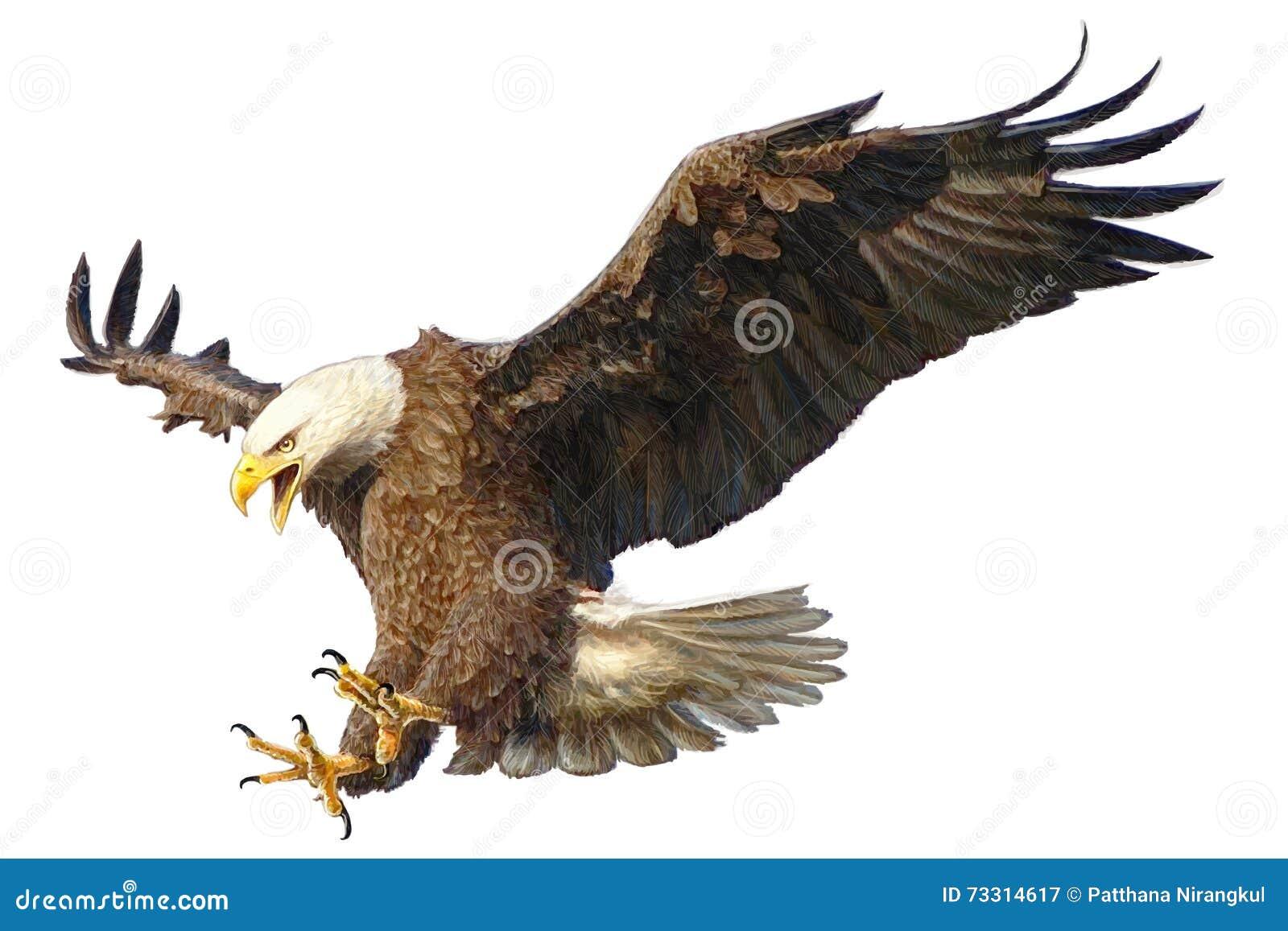 Illustration De Vecteur D'attaque D'Eagle Chauve ...