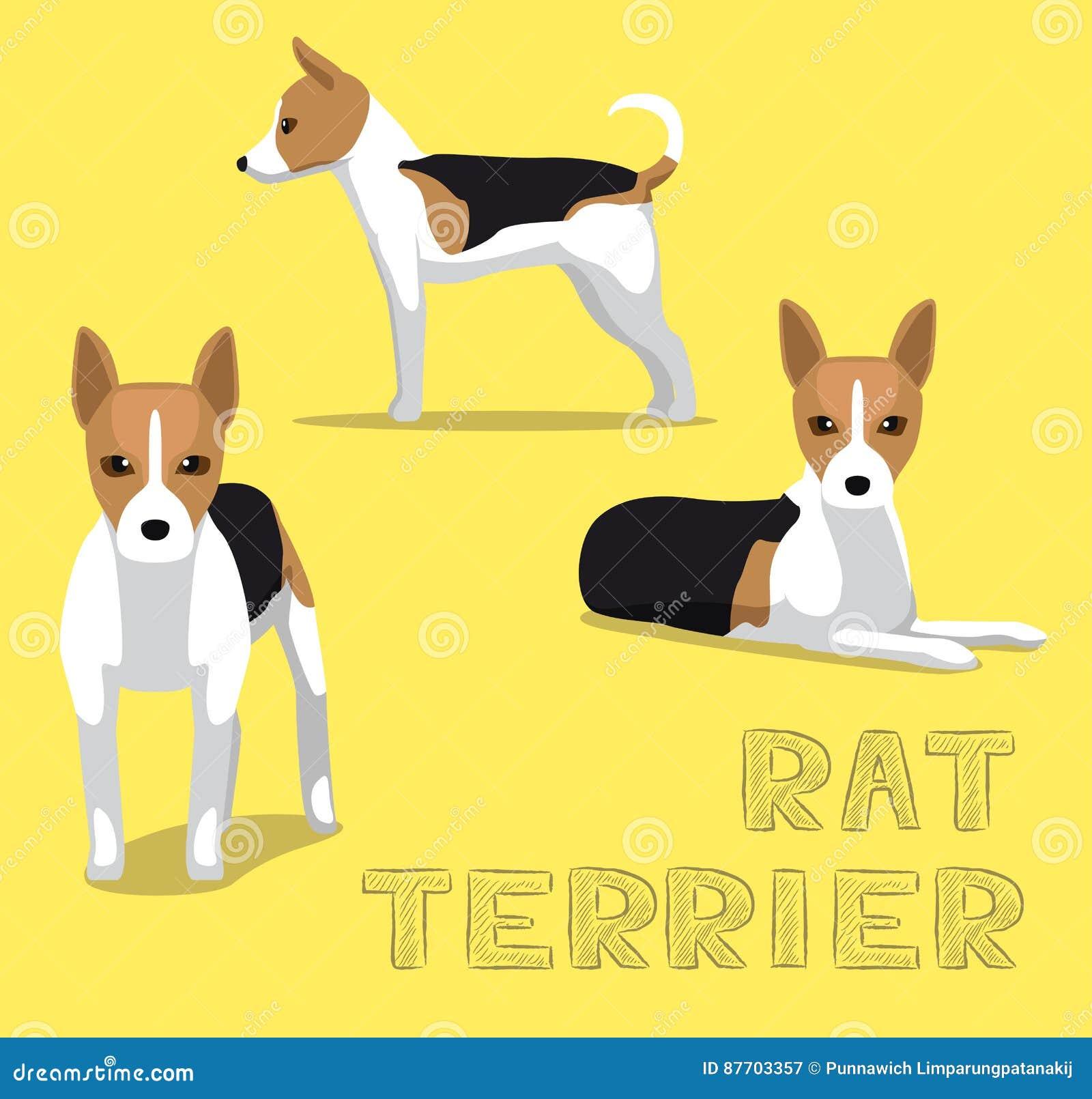 Illustration de vecteur de bande dessinée de Rat terrier de chien