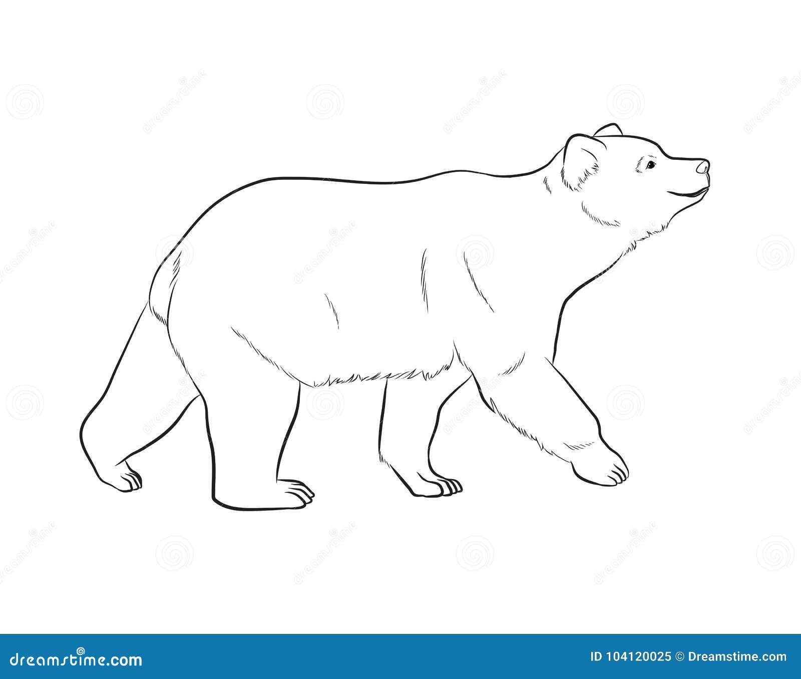 Illustration de vecteur de dessin d 39 ours illustration de - Dessin contour ...