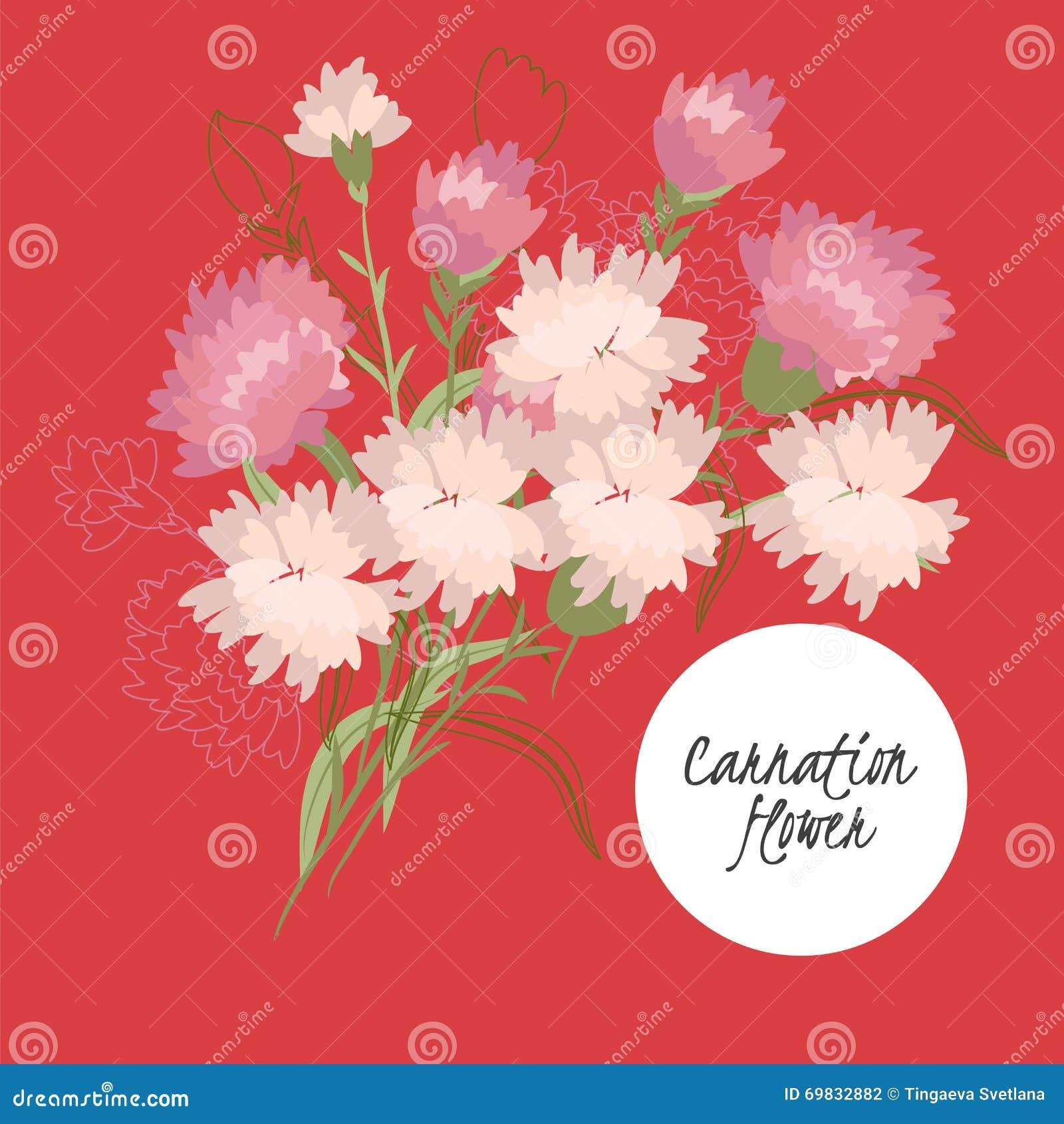 illustration Delicate carnation flower