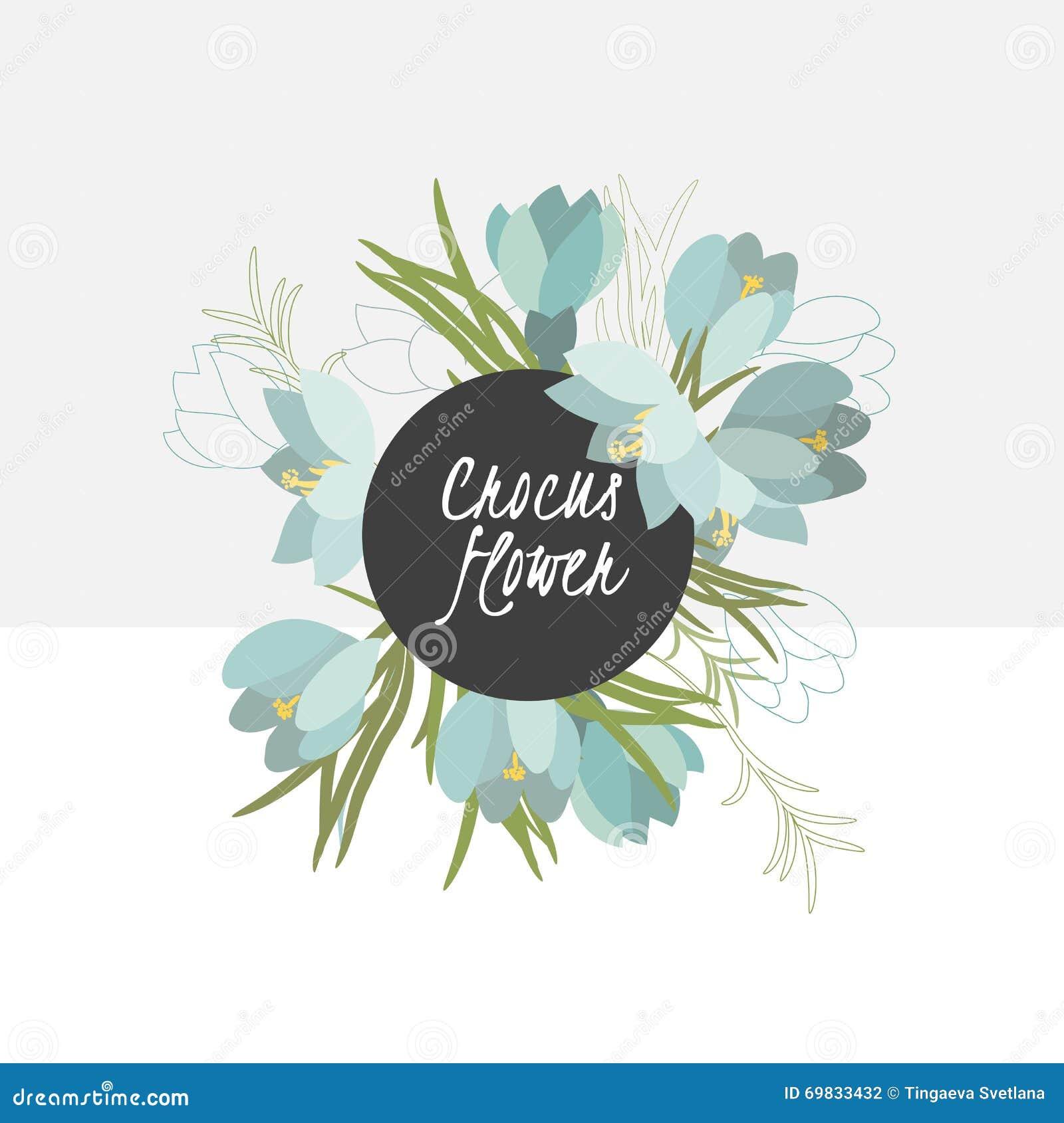 illustration Delicate crocus flower