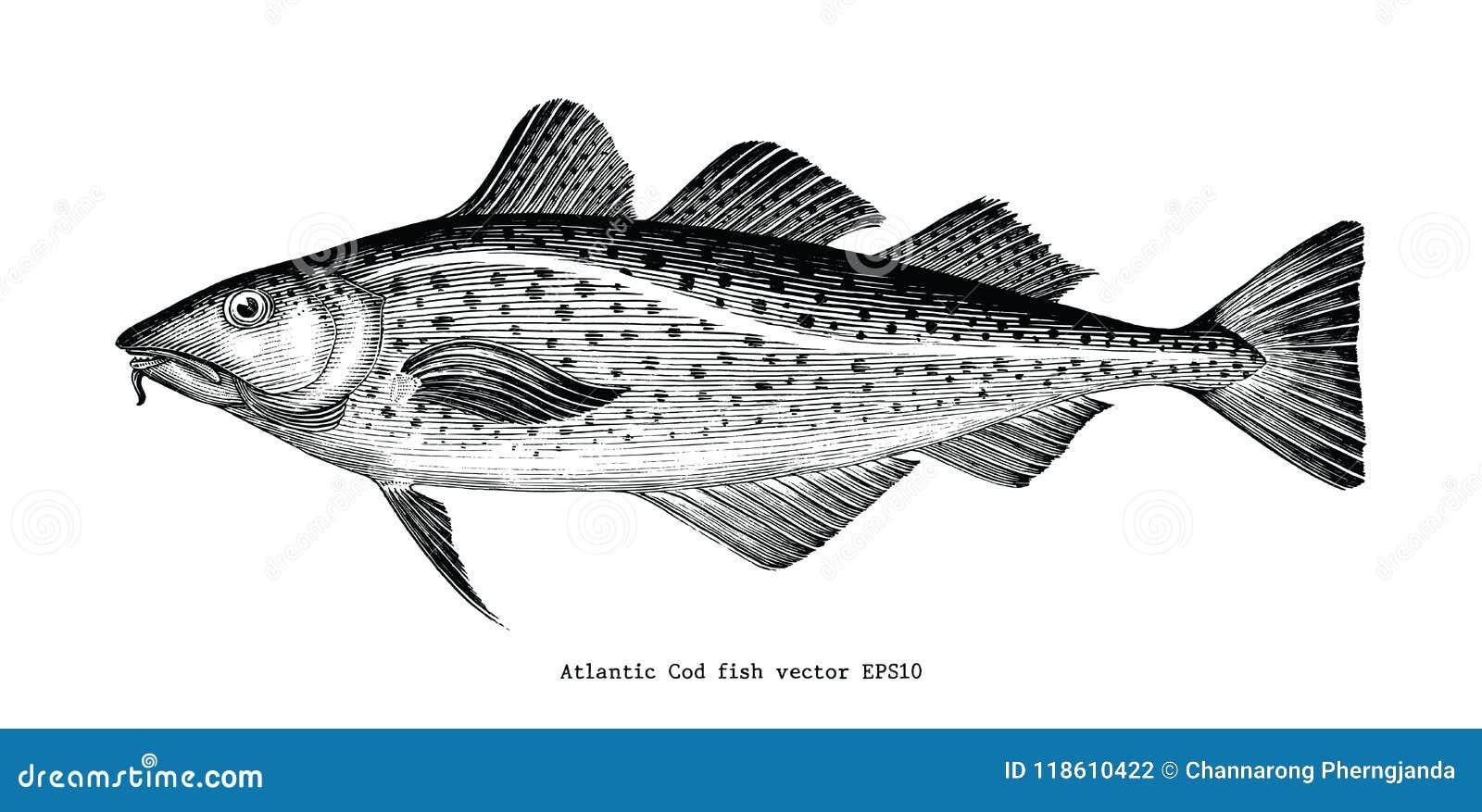 Illustration för gravyr för tappning för teckning för hand för fisk för atlantisk torsk