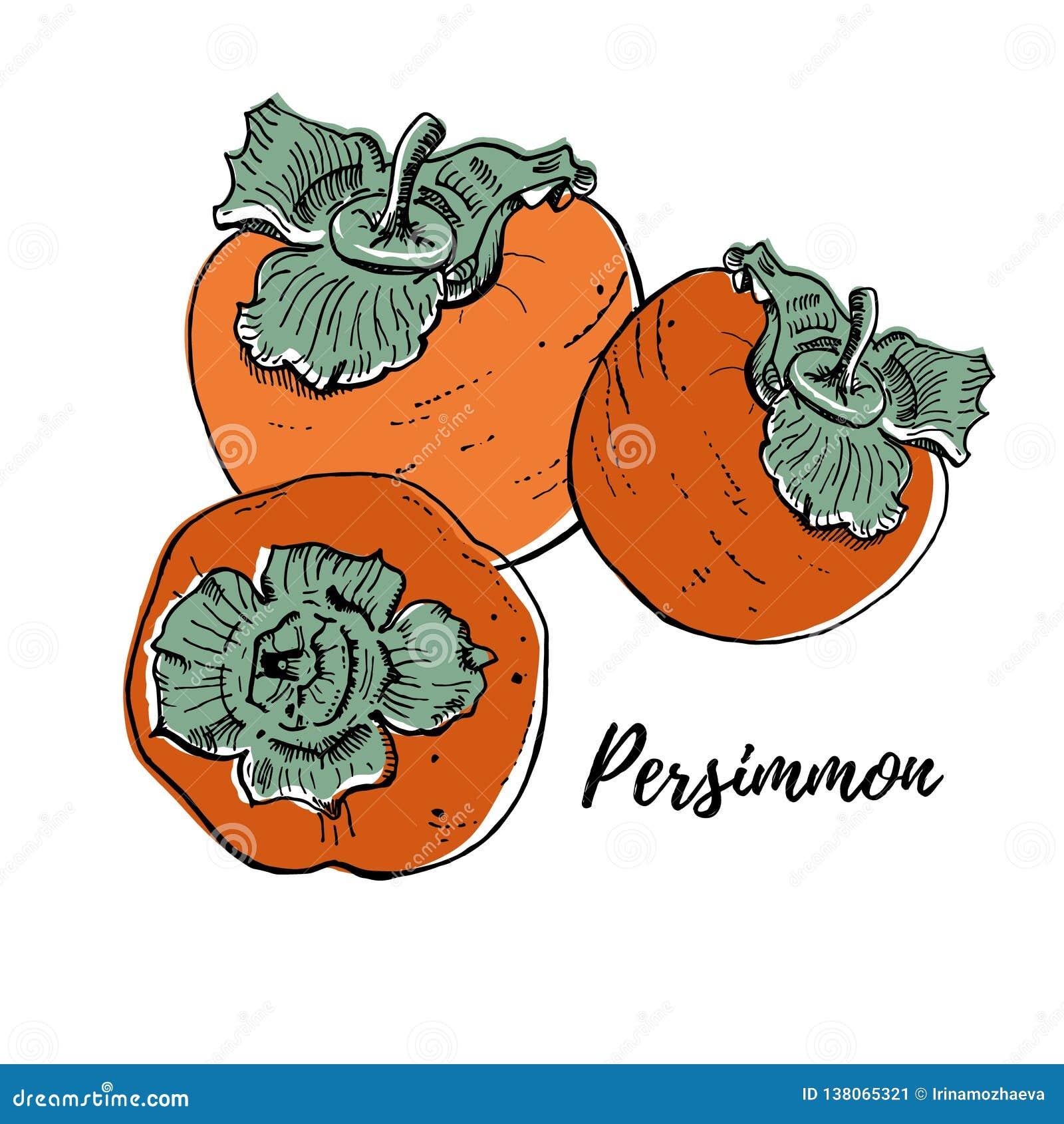 Coloriage Fruit Kaki.Illustration Fraiche Mure De Vecteur De Kakis D Isolement Sur Le