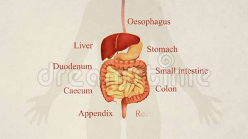 Illustration Of Gastrointestinal Tract Anatomy Stock Video - Video ...