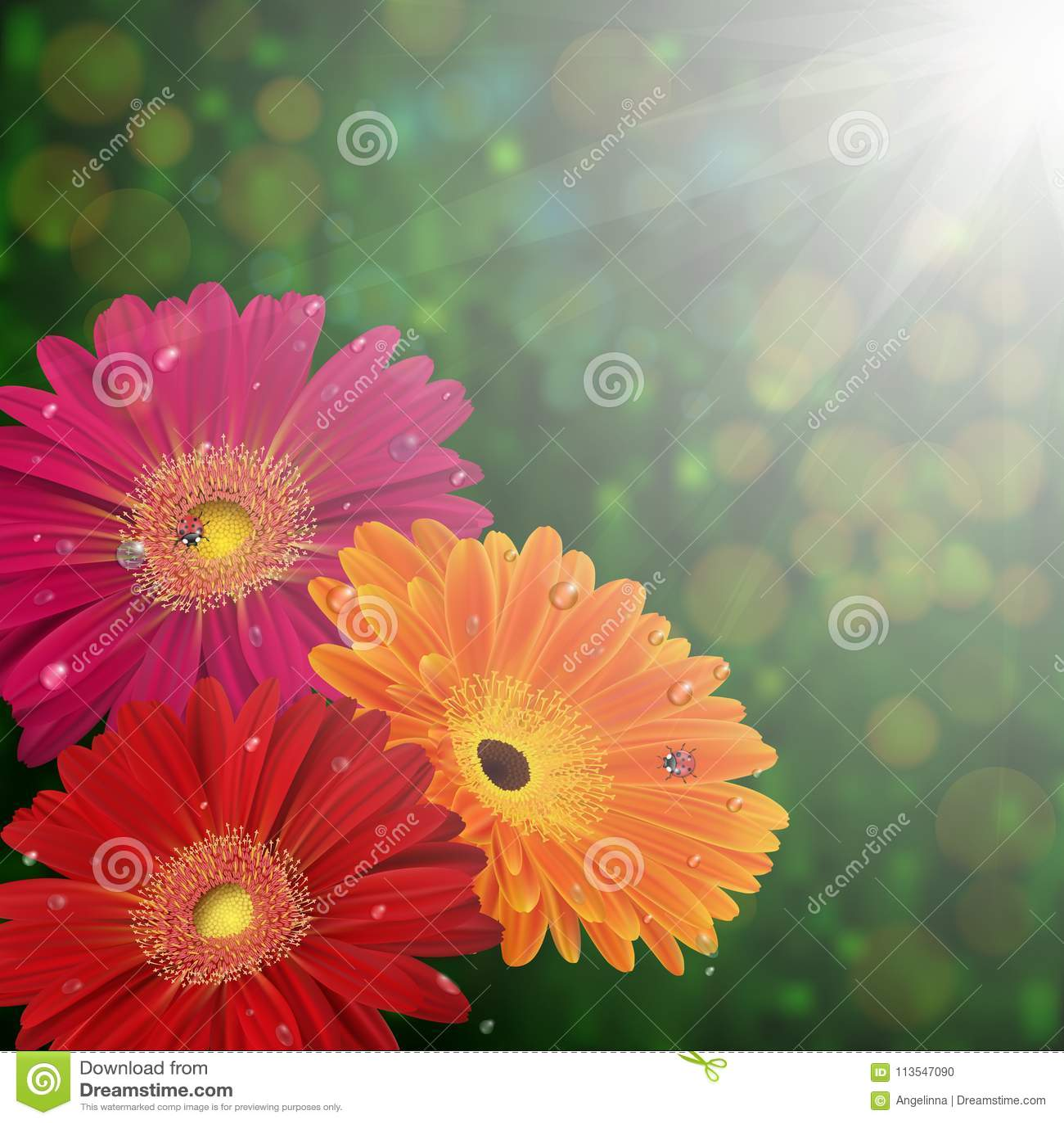 floral card template stock vector illustration of gerbera 113547090