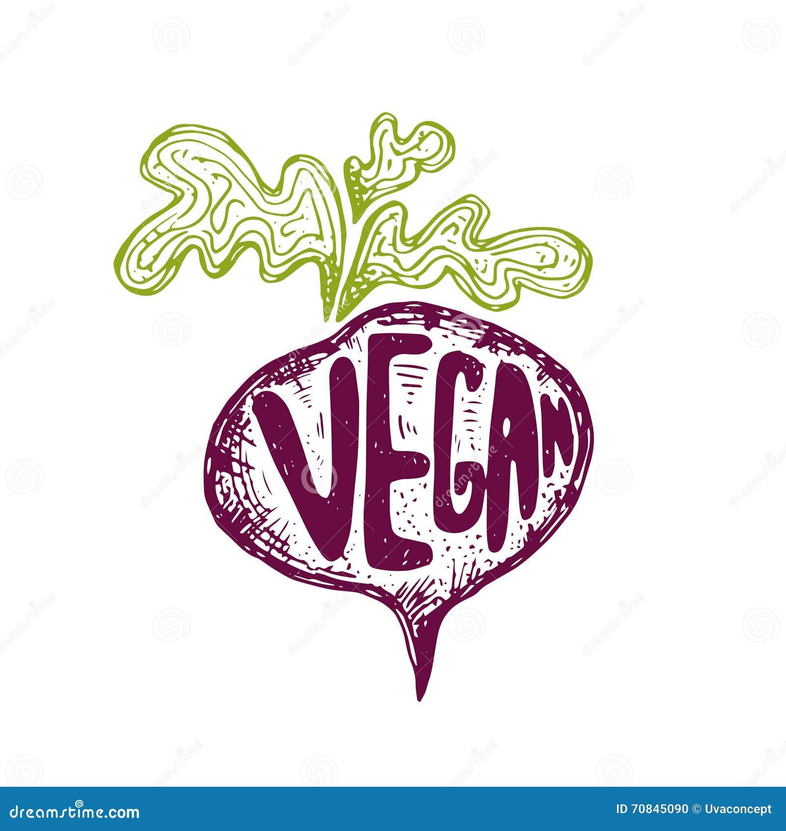 Illustration of hand drawn beetroot text vegan. Vector