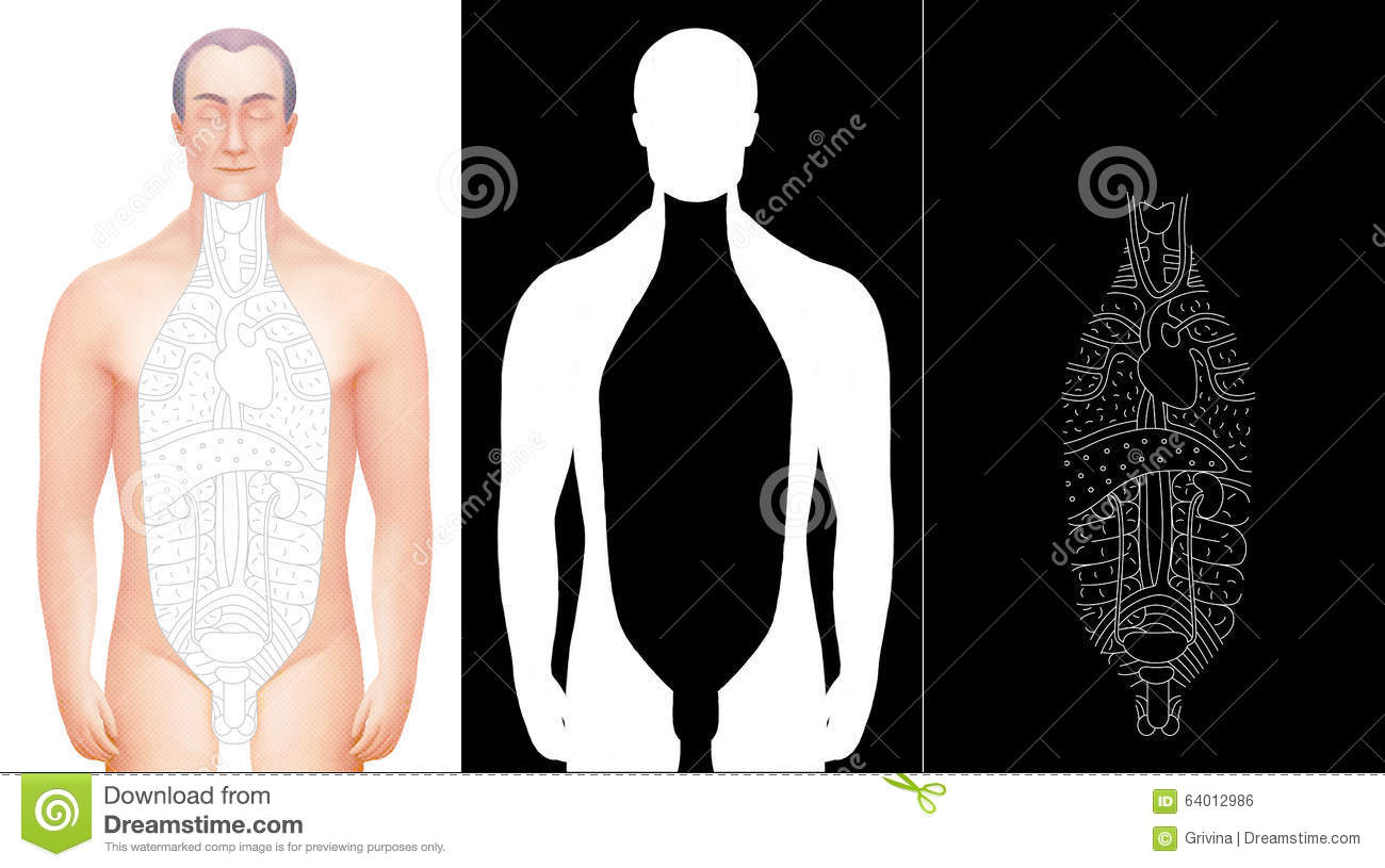 Illustration Of Hand Drawn Excised Male Anatomy Model Stock ...