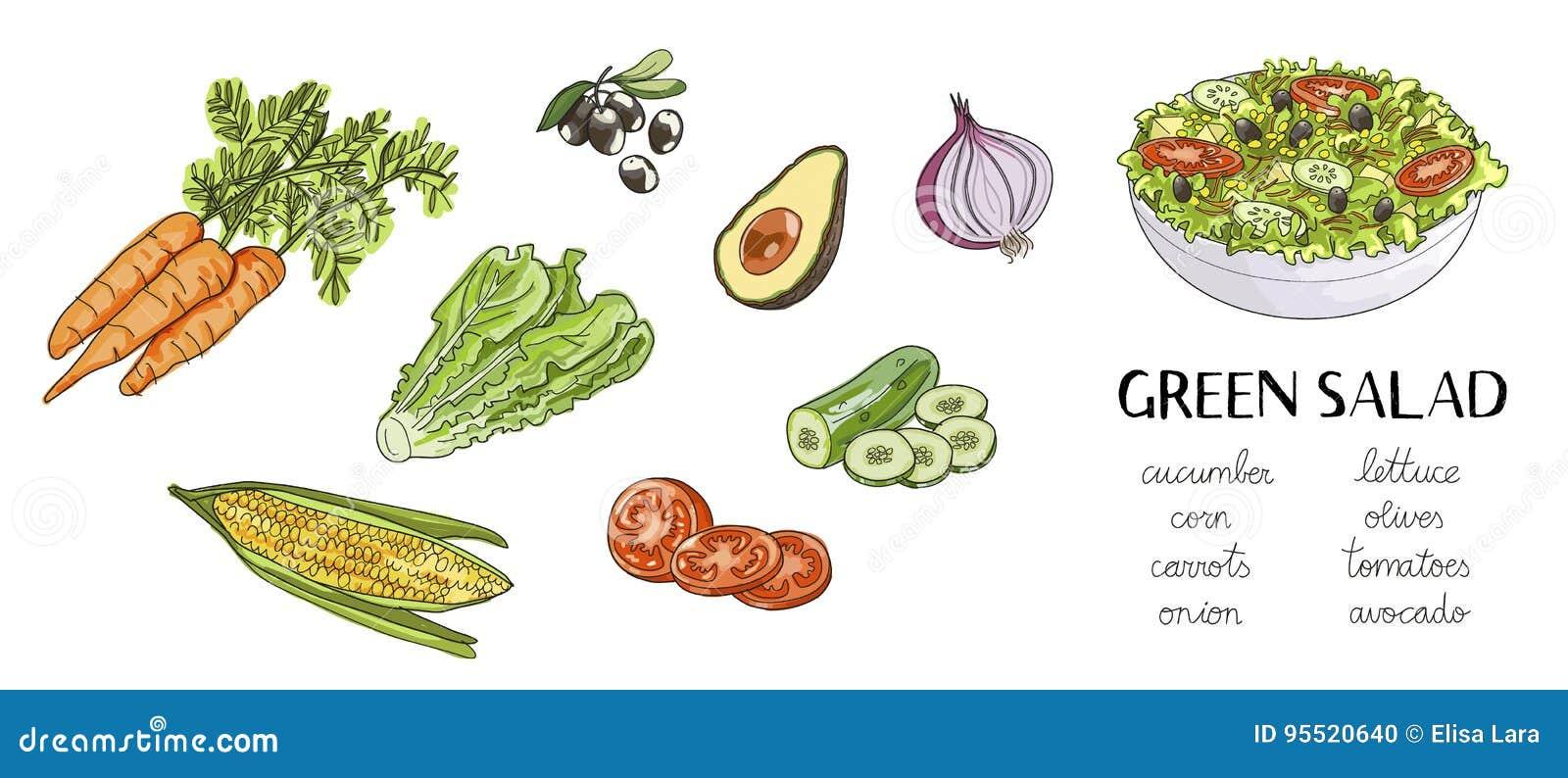 Illustration of hand drawn green salad ingredients:
