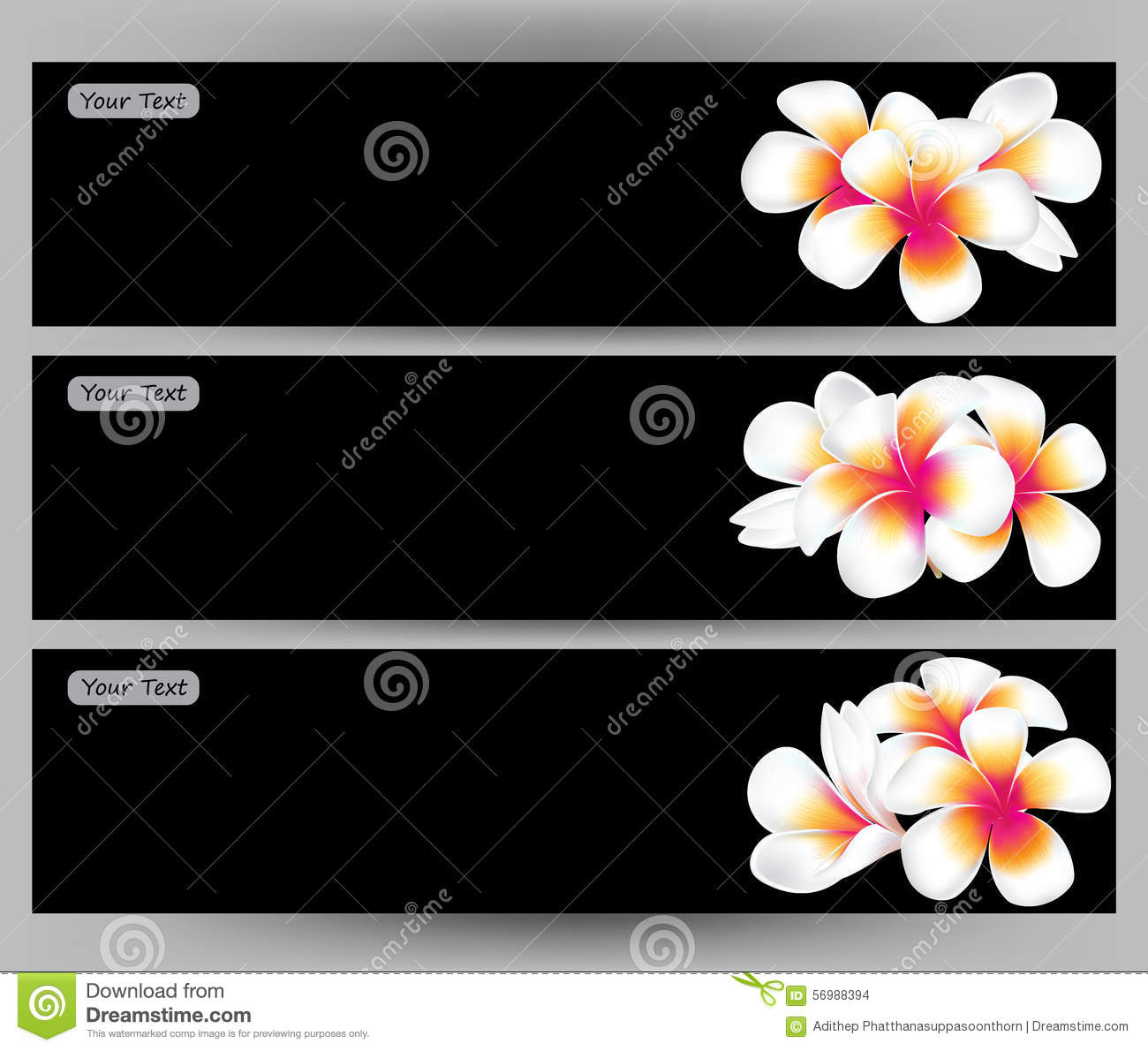 Illustration Of Hawaii Flower Frangipani White Plumeria Brochure